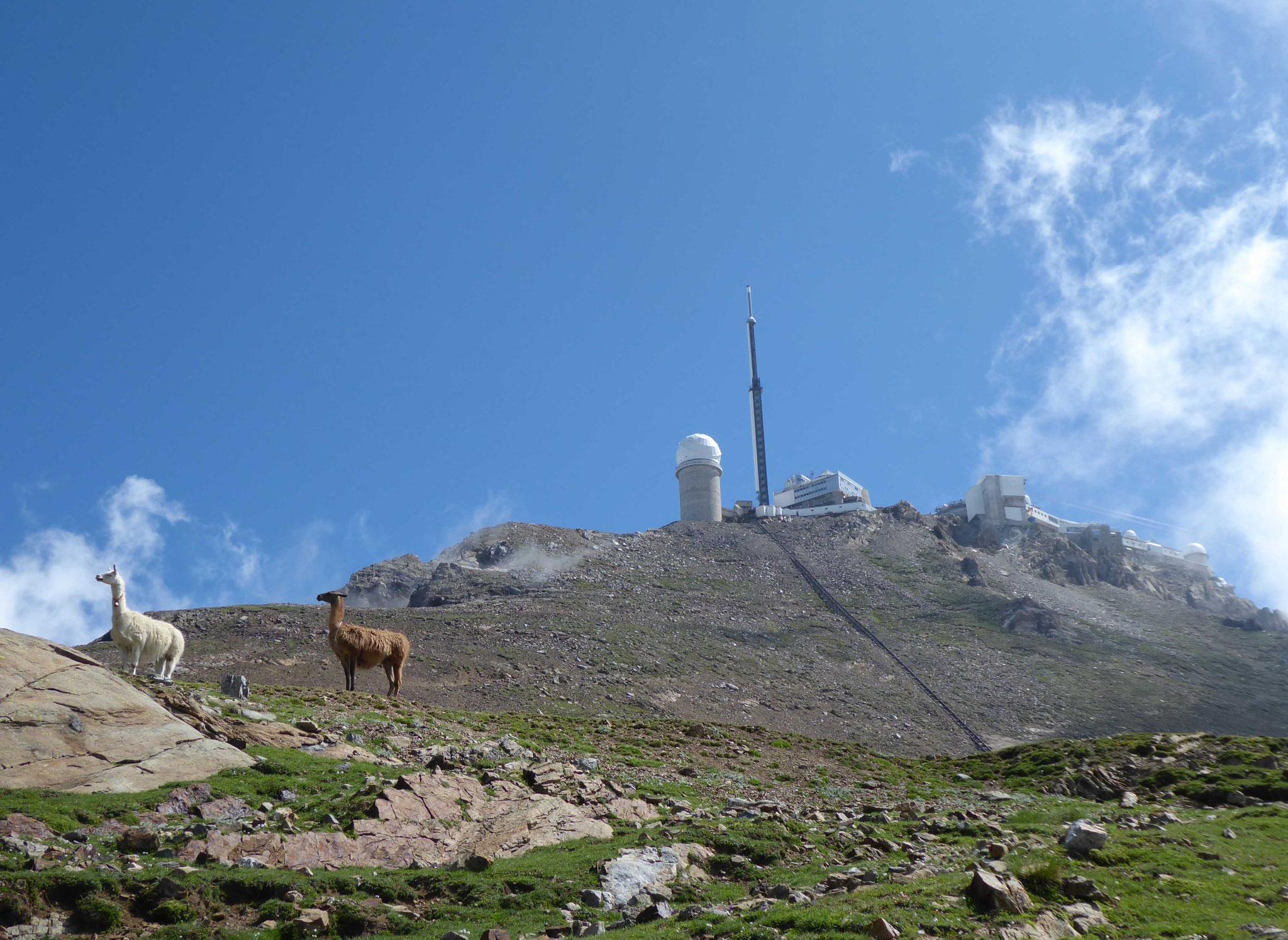 """L'altitude aurait-elle des effets sur les """"animaux pyrénéens"""" ?"""