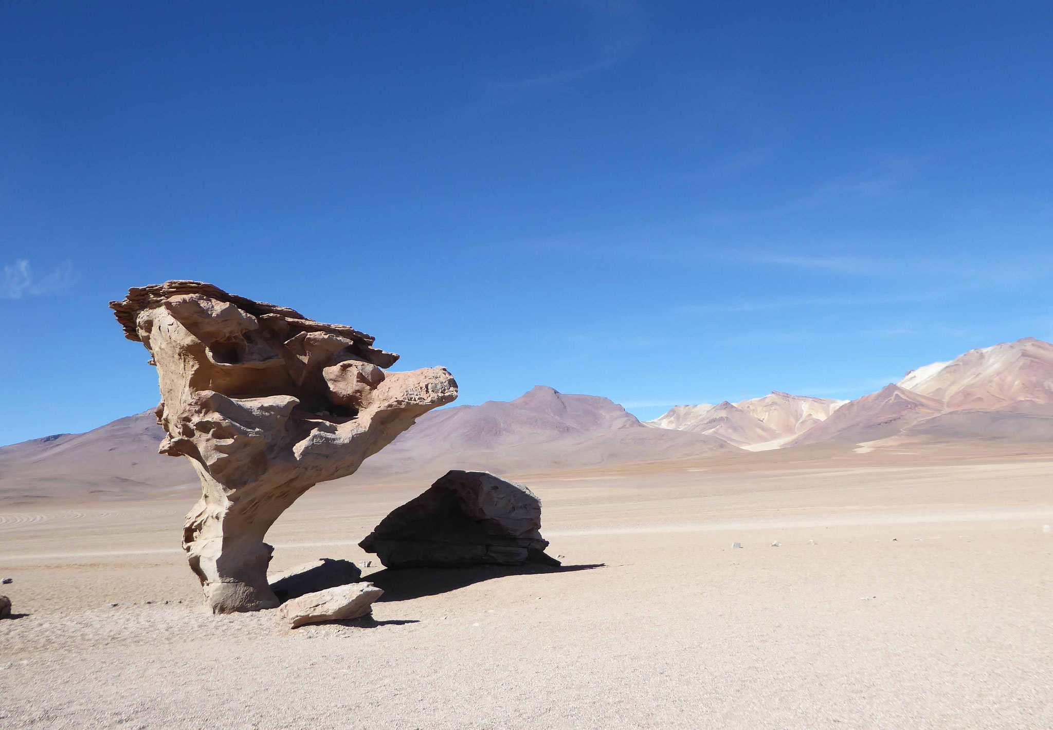 Le non moins célèbre arbre de pierre dans le désert Siloli