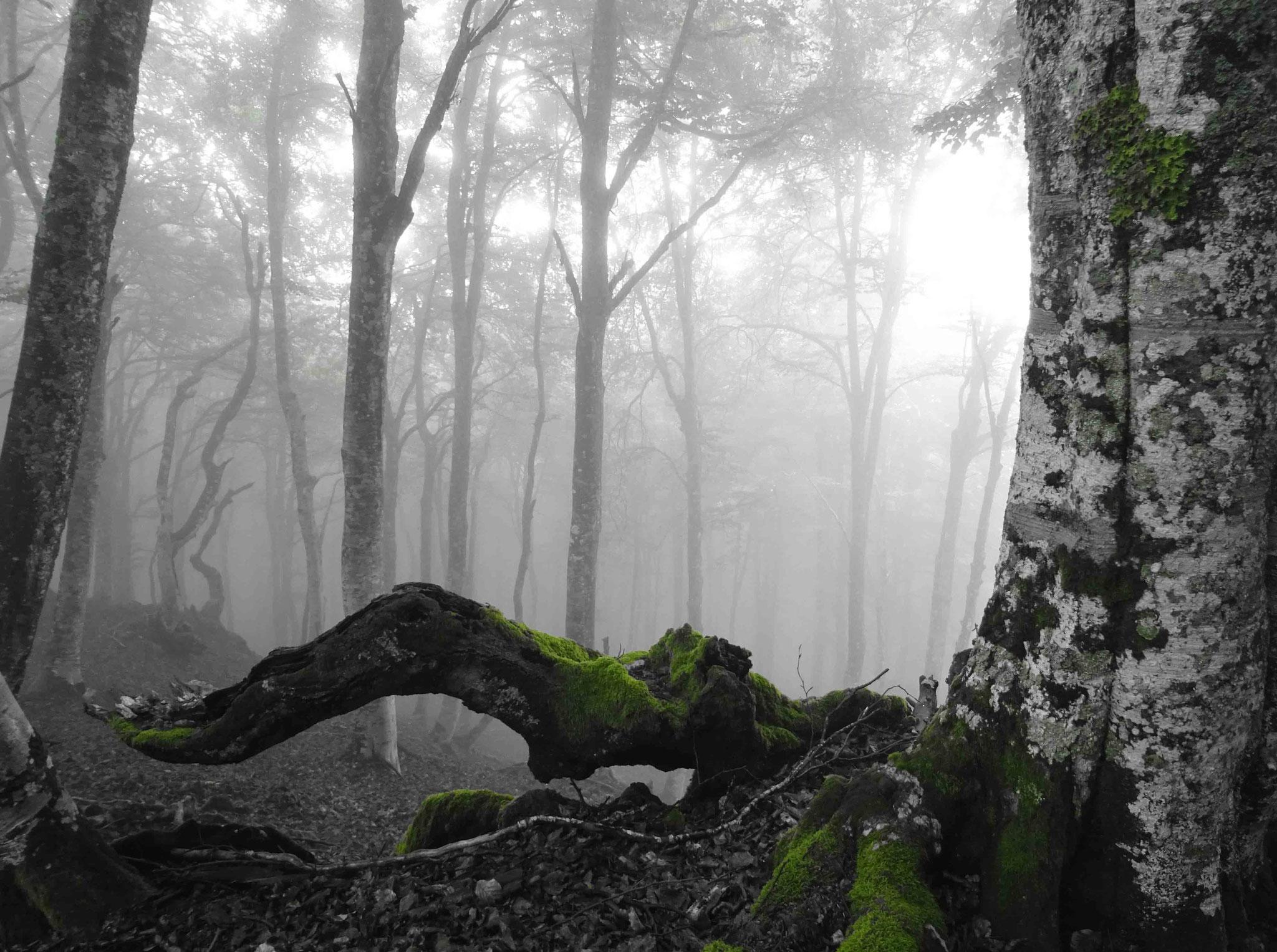 Quasi forêt envoûtante de Brocéliande...