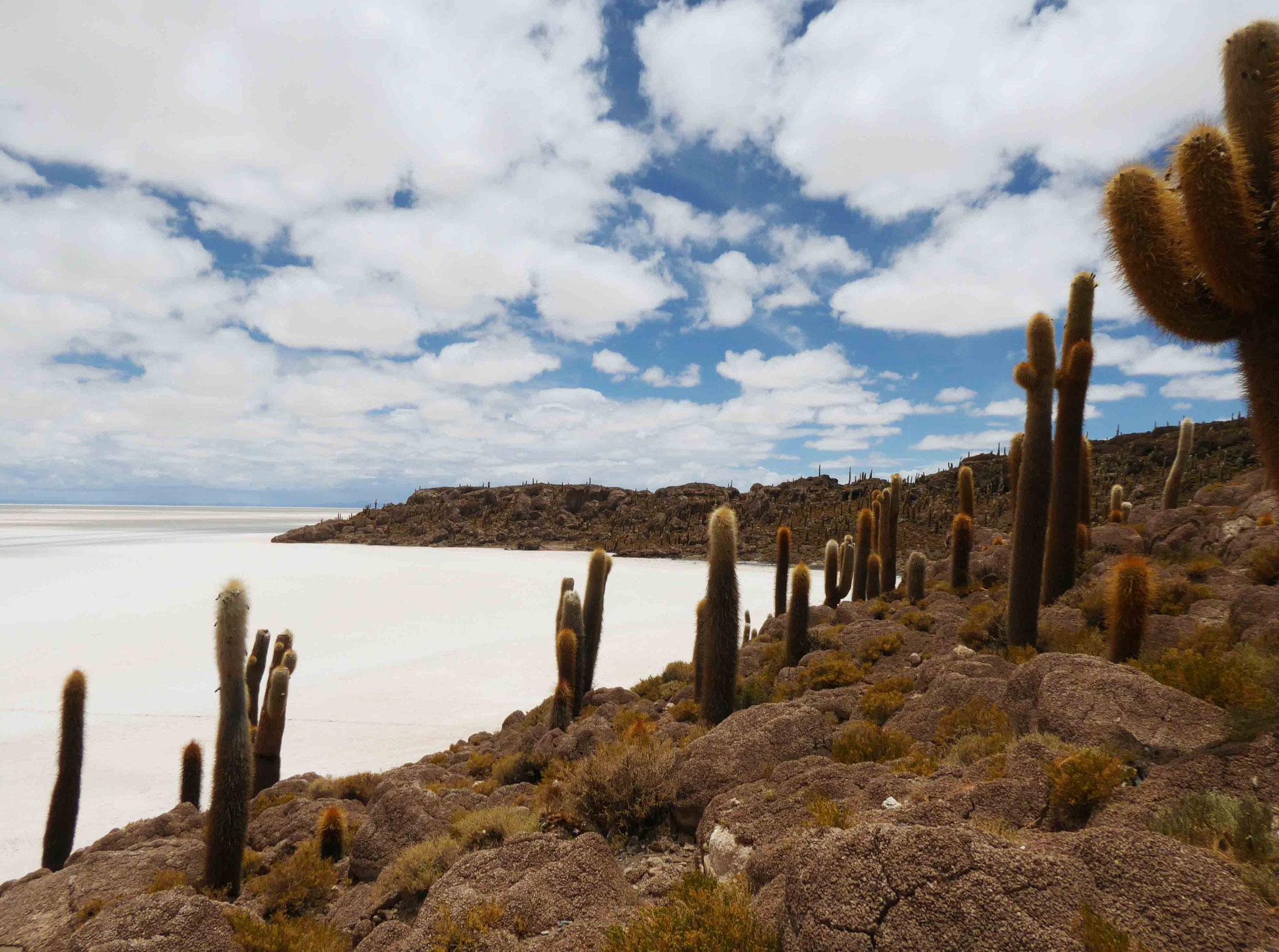 Le salar, les cactus... sur l'île Incahuasi (la maison de l'Inca)
