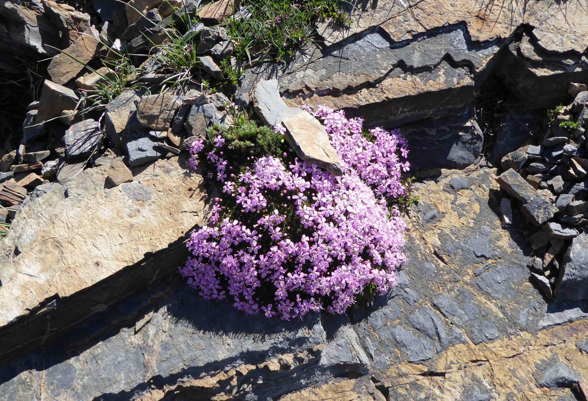 La flore est toujours bien présente, même en altitude