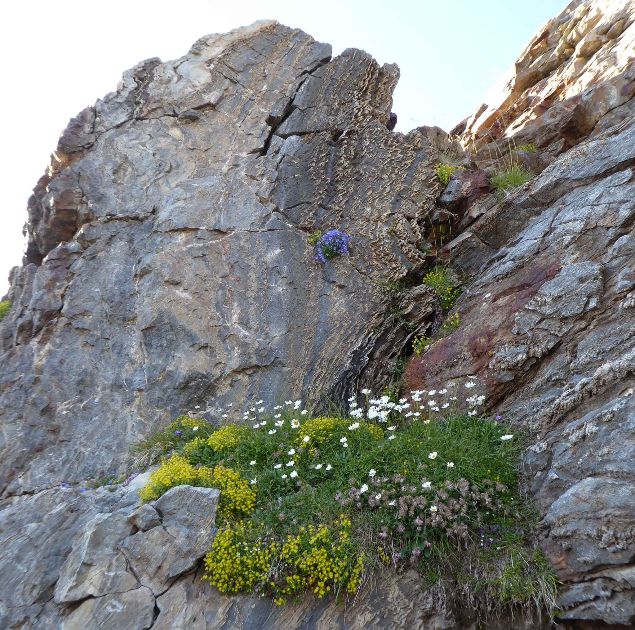 Quand la flore et la roche s'imbriquent l'une à l'autre...