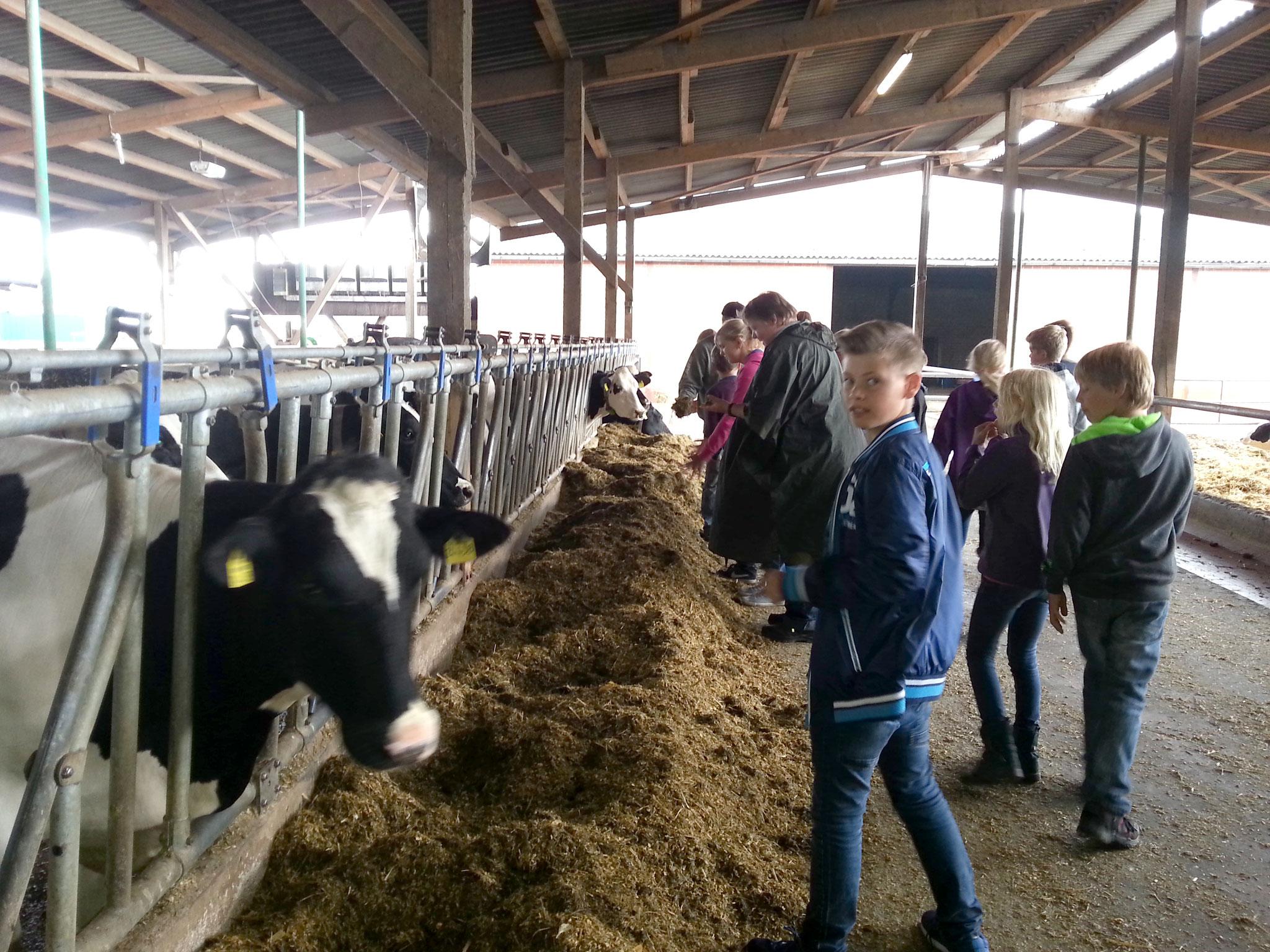 Zu Besuch im Milchvieh-Betrieb