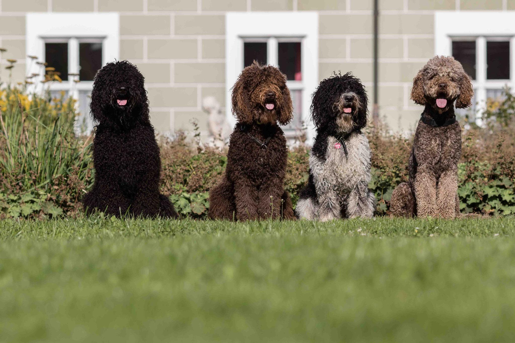 Von links: Jacko, Bluna, Pepsi, Bürschtel