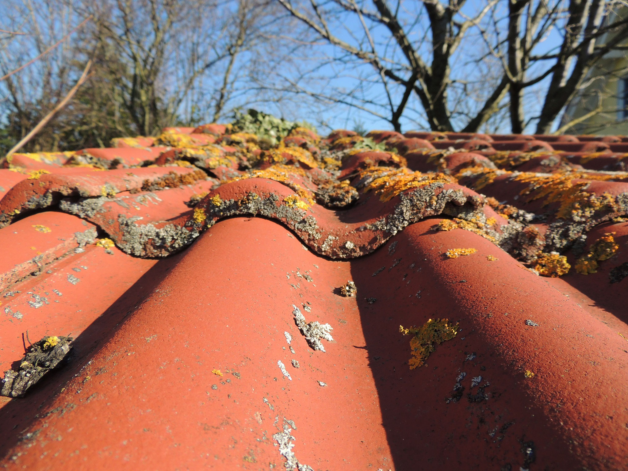 Ein stark befallenes Dach vor der Ausführung