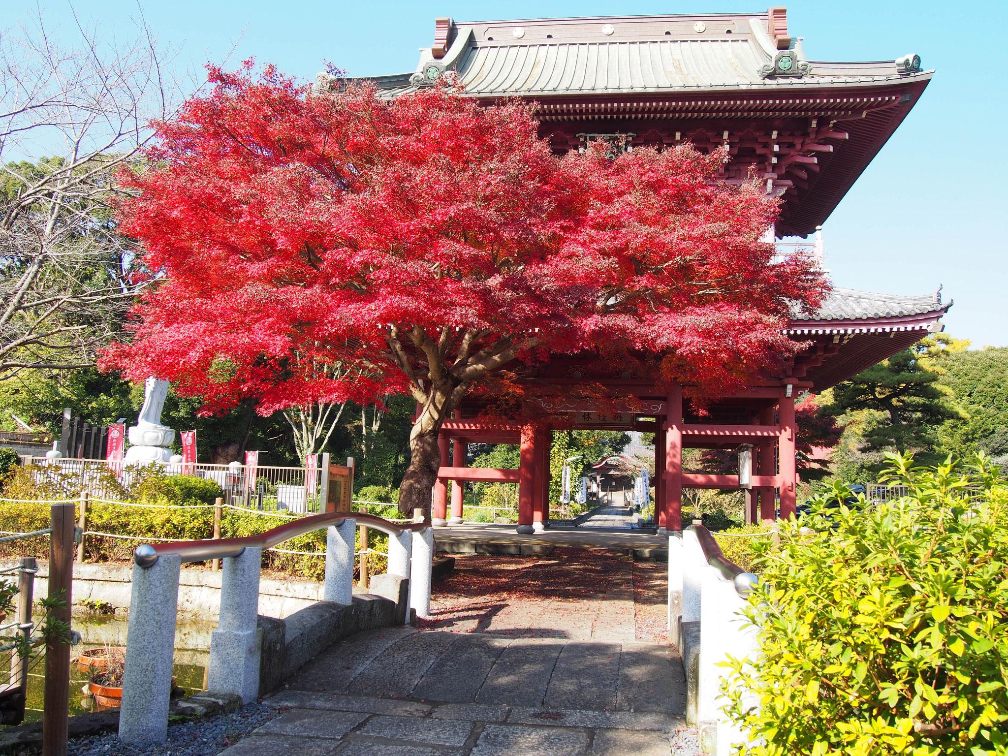 大巌寺 紅葉と山門