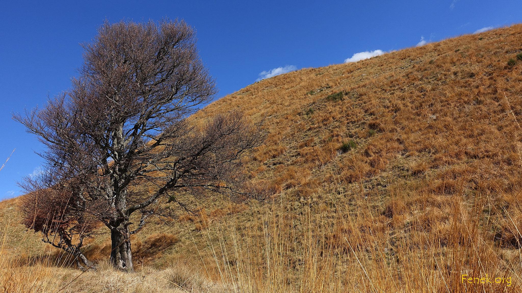 unter dem Gipfel vom Monte Ferraro