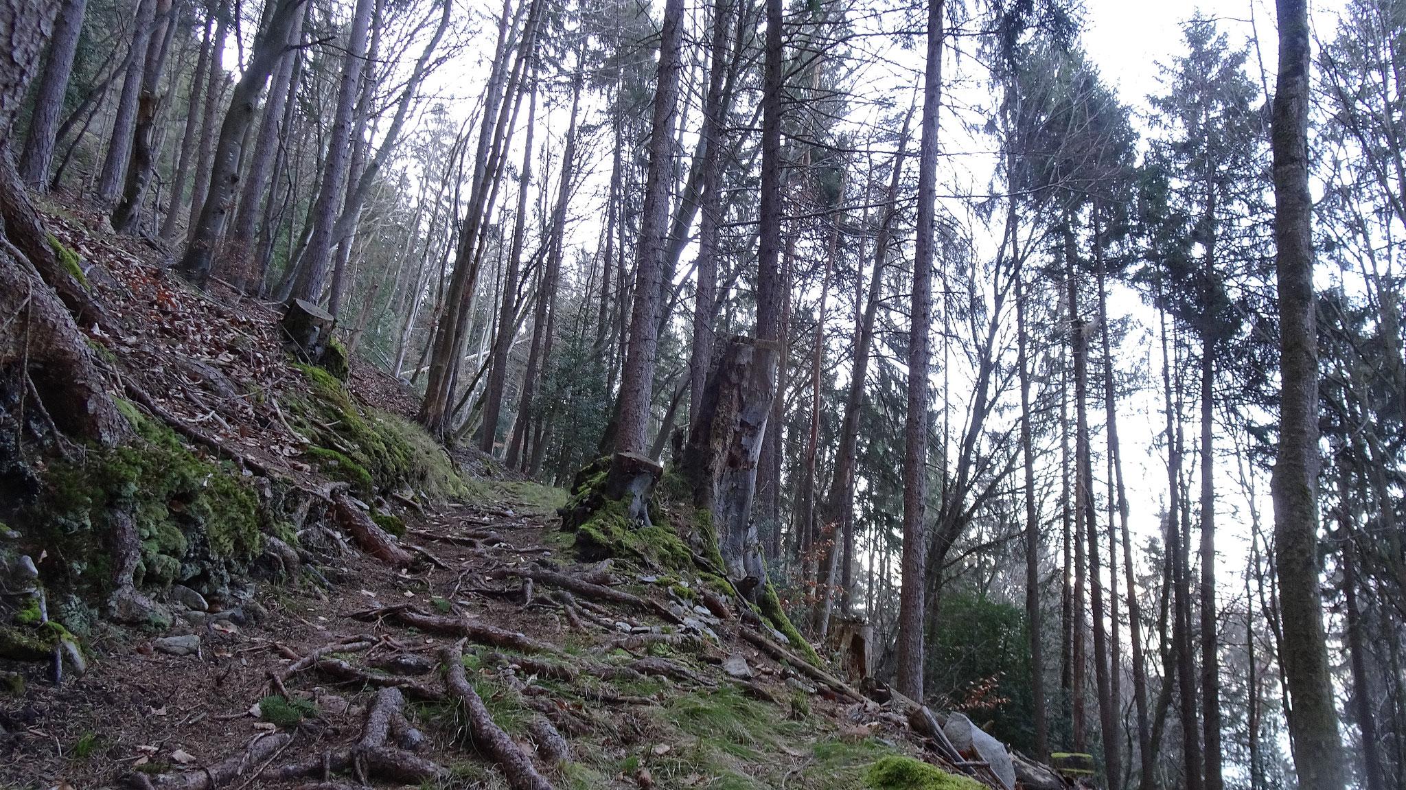 zuerst im Wald....