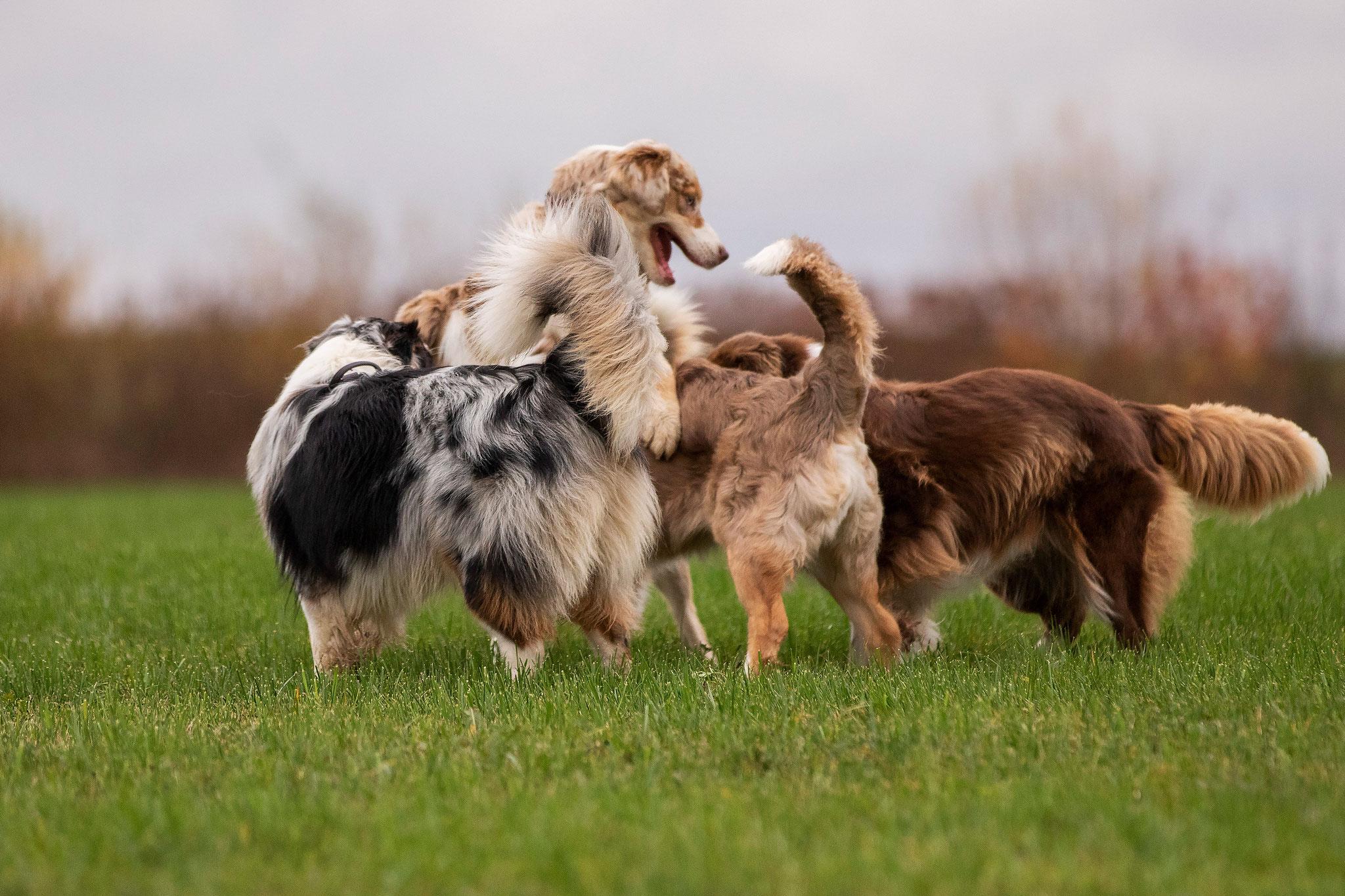 Hundegewusel