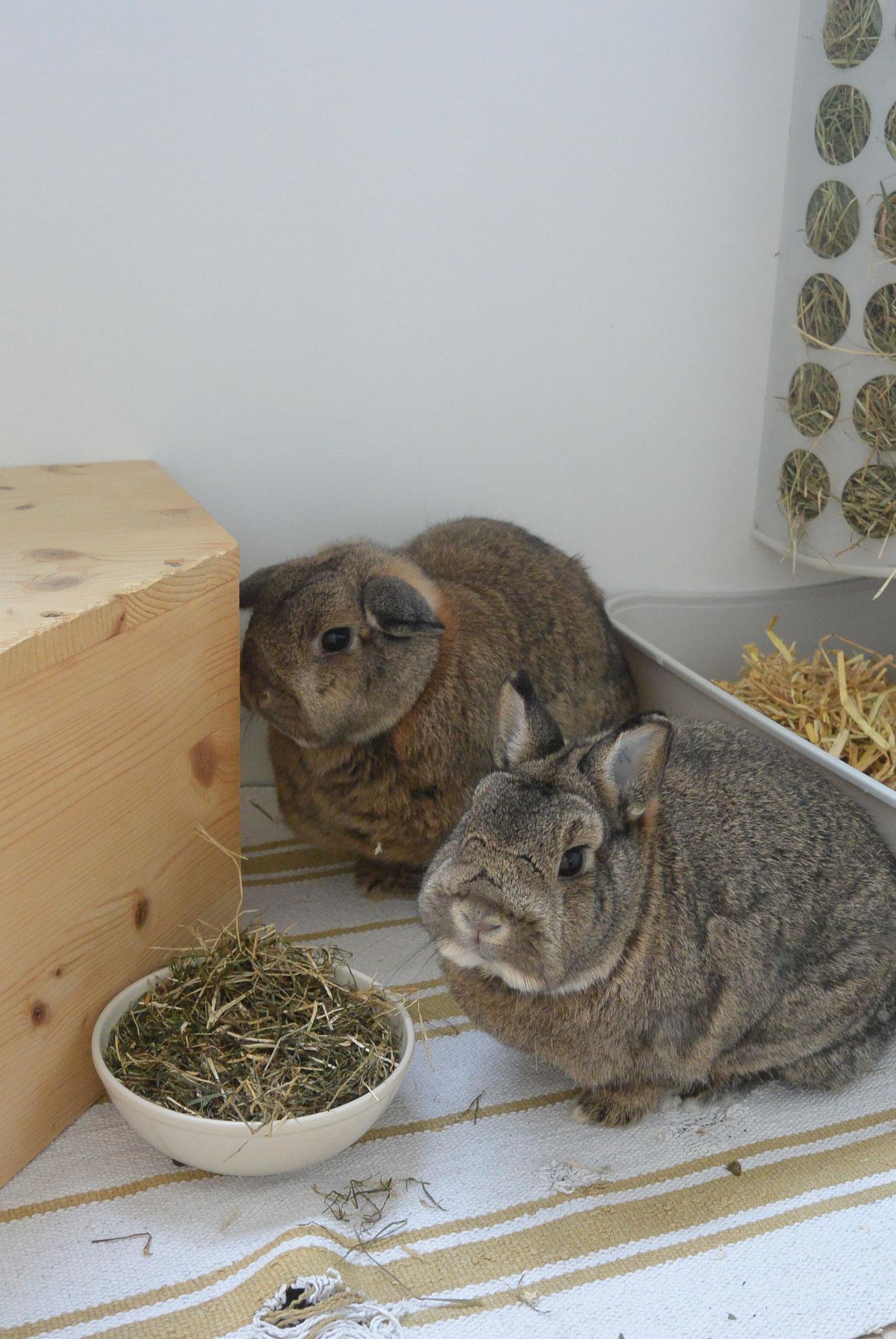 Lili & Bobo