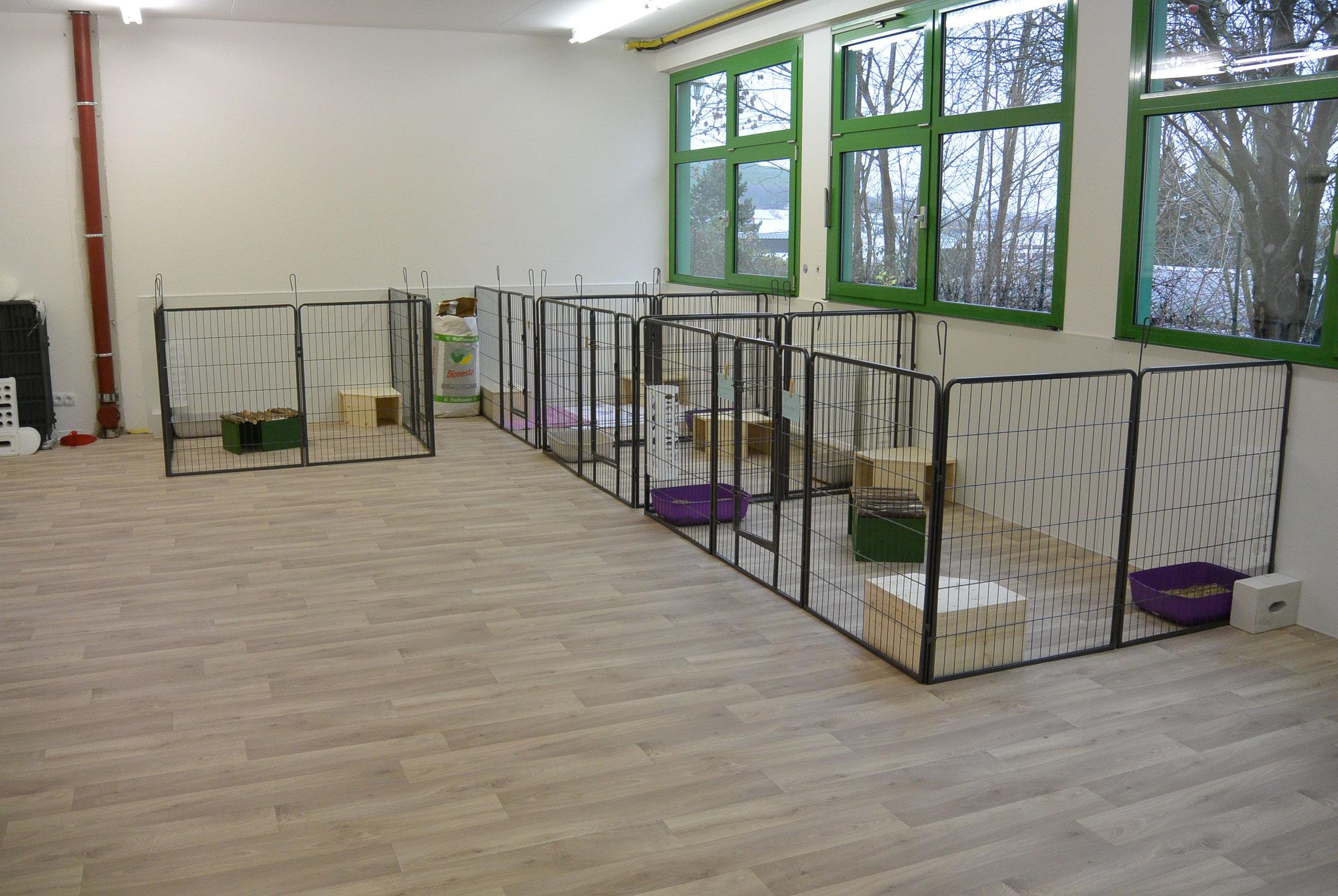 Auch die Kaninchenanlage sollte schon längst stehen, leider hat uns der Lieferant versetzt also erst einmal provisorisch für die ersten Gäste