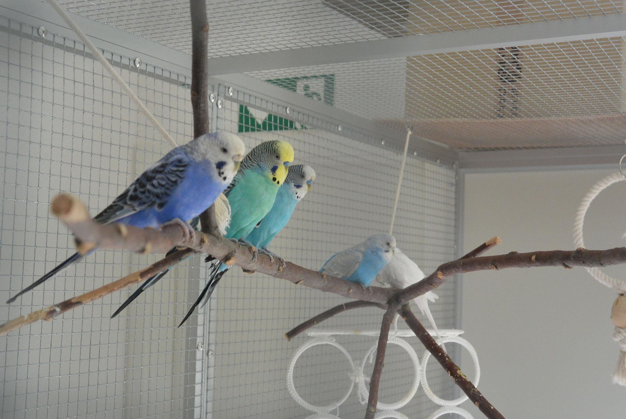 Gandalf, Sunny, Wölkchen, Shiny, Polly & Mucki