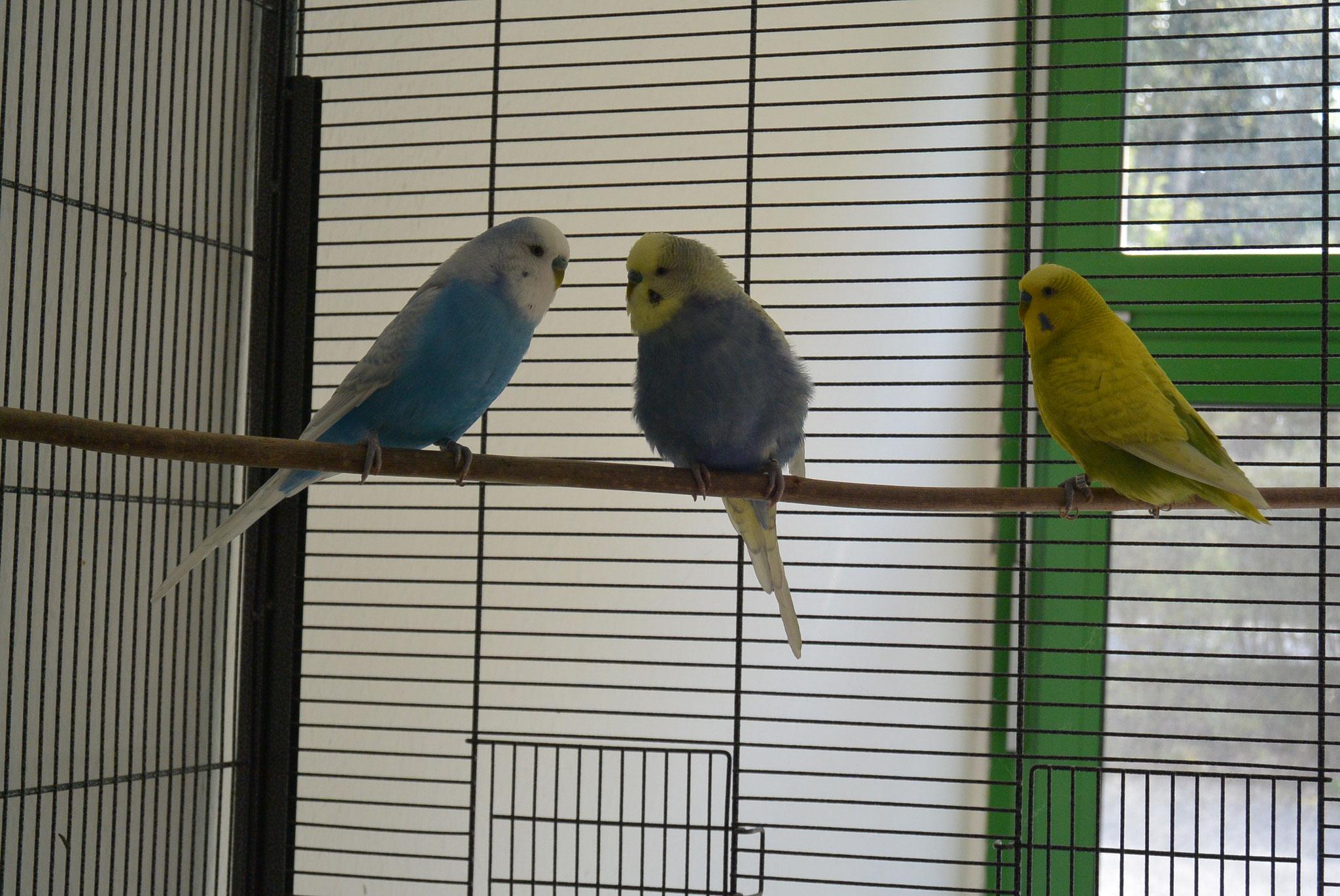 Eliott, Dori & Humpty