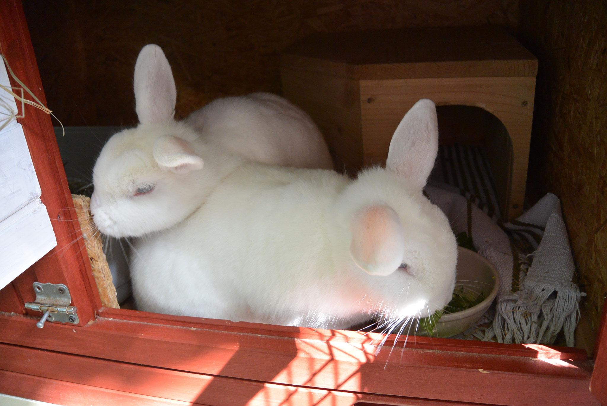 Jimmy & Susi