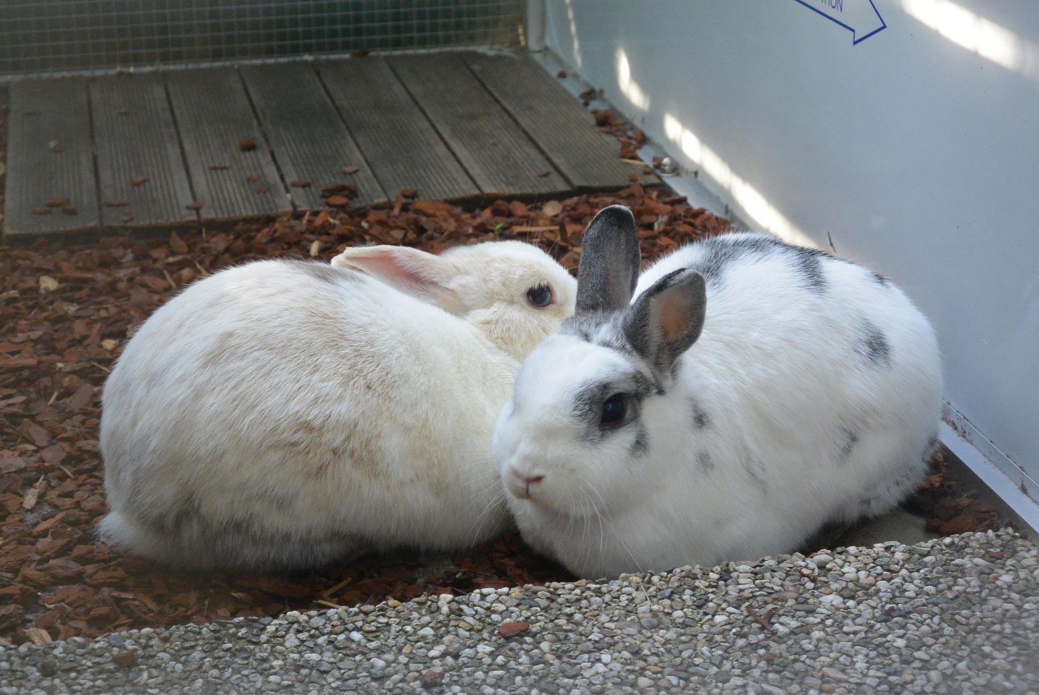 Nini & Silbry