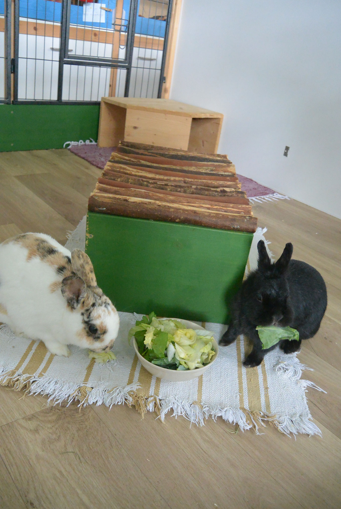 Bunny & Leoni