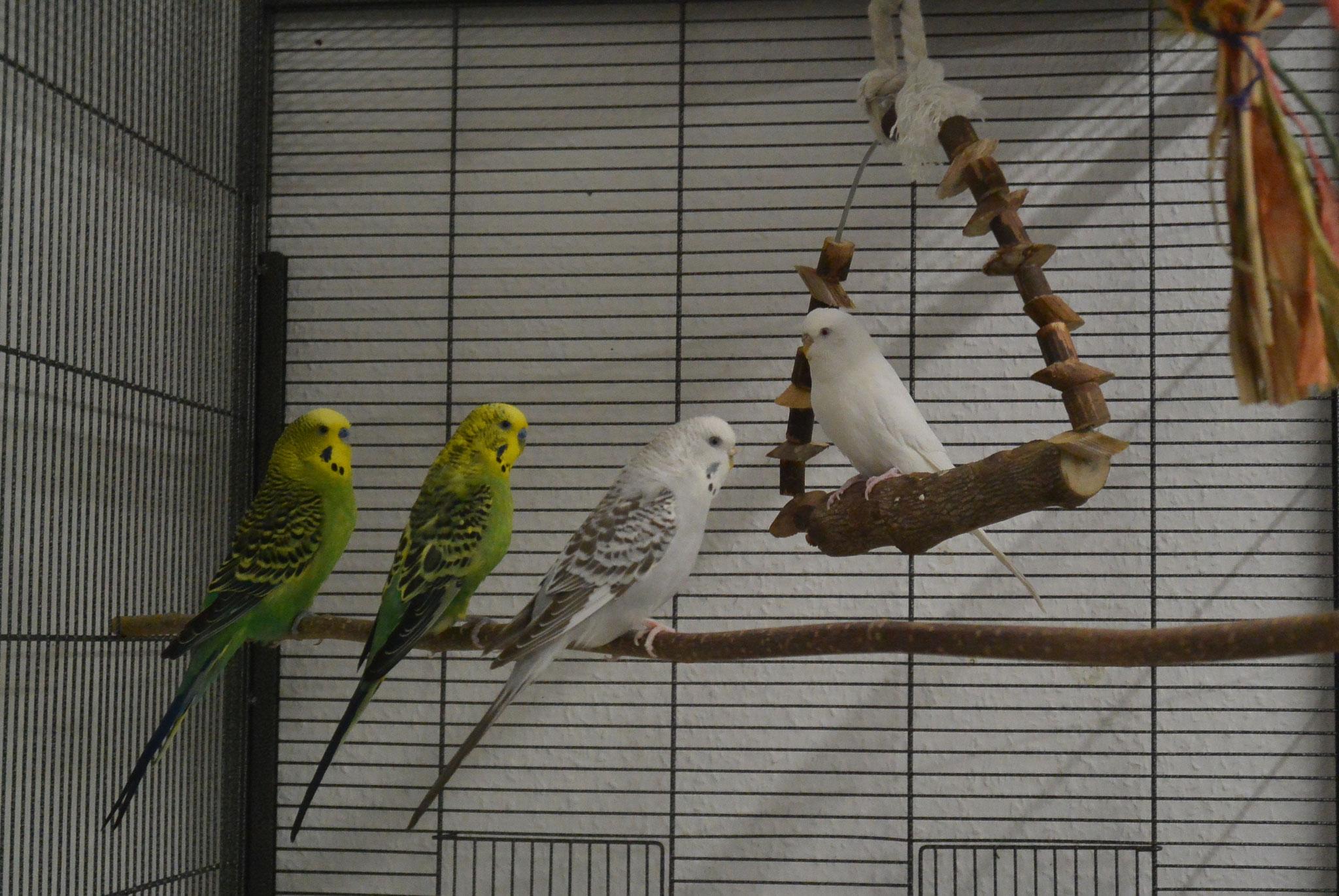 Teepo, Mila, Anivia, Merlin