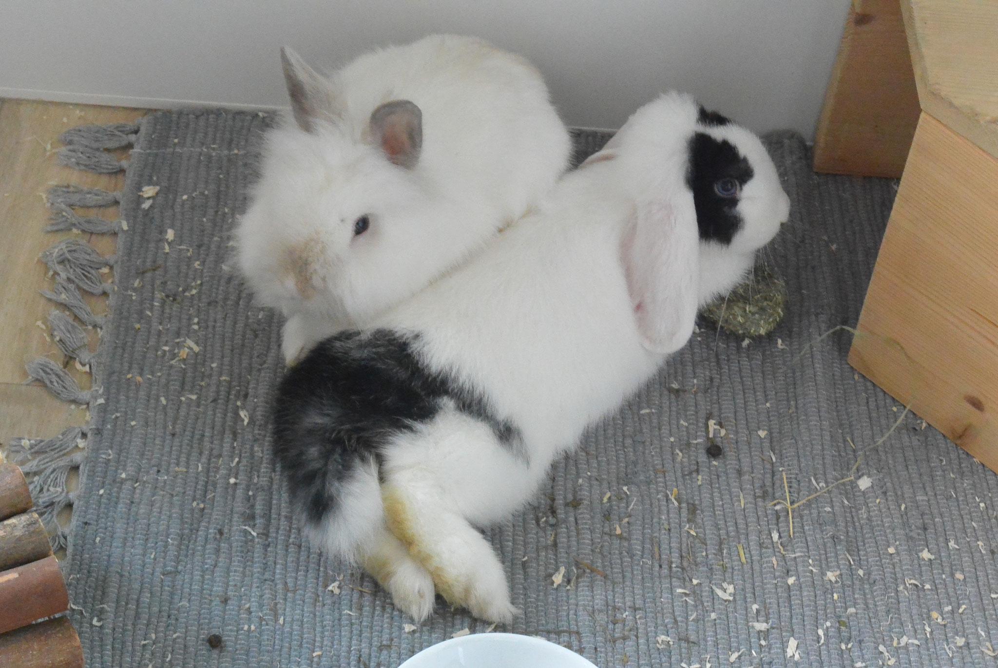 Maja & Jerry
