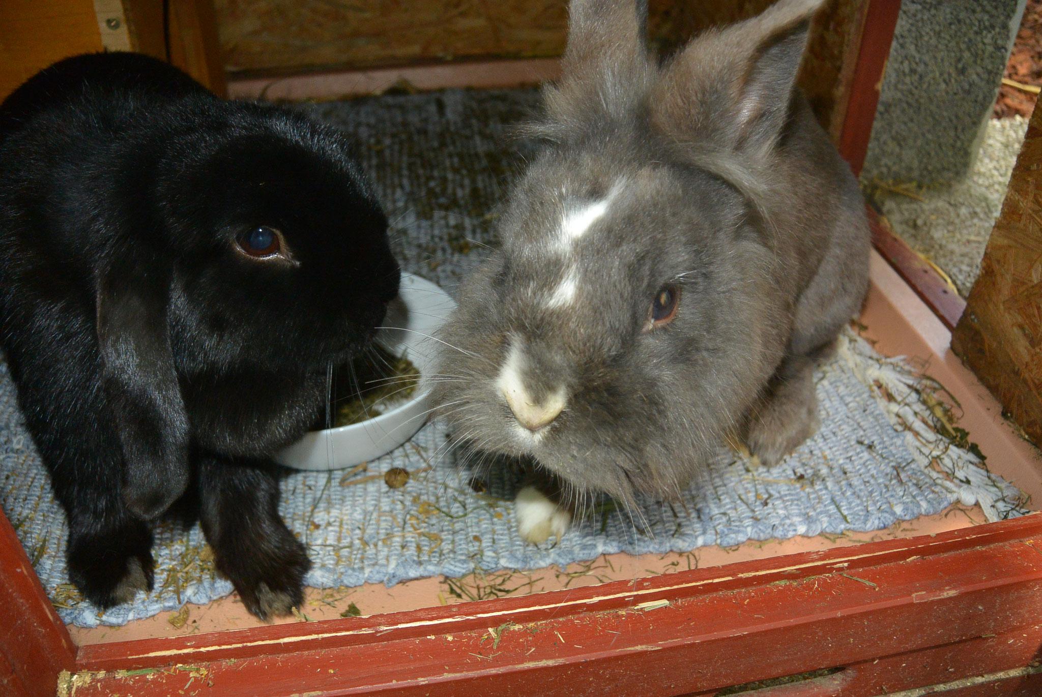 Polly & Merlin