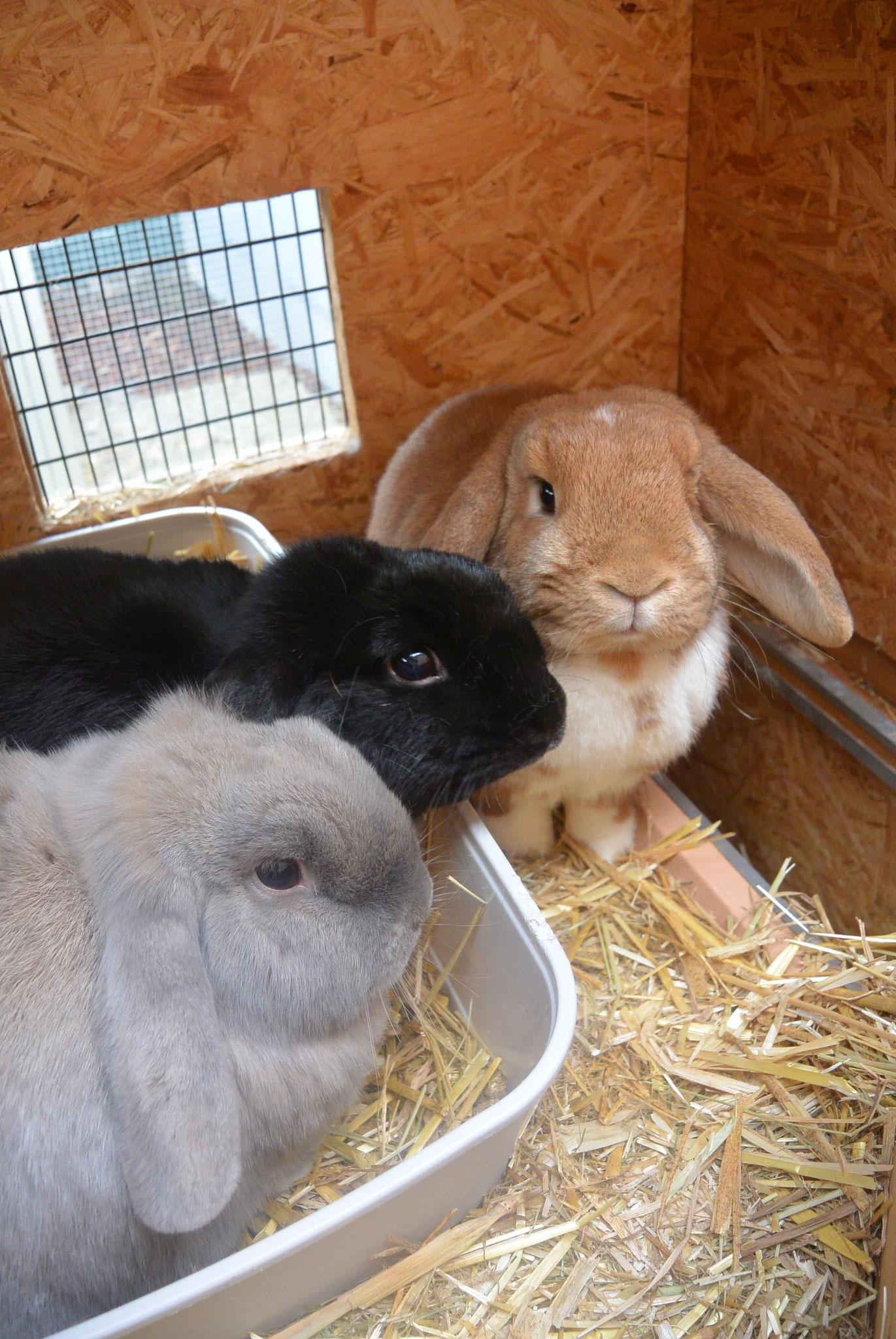 Carlos, Luna & Sunny