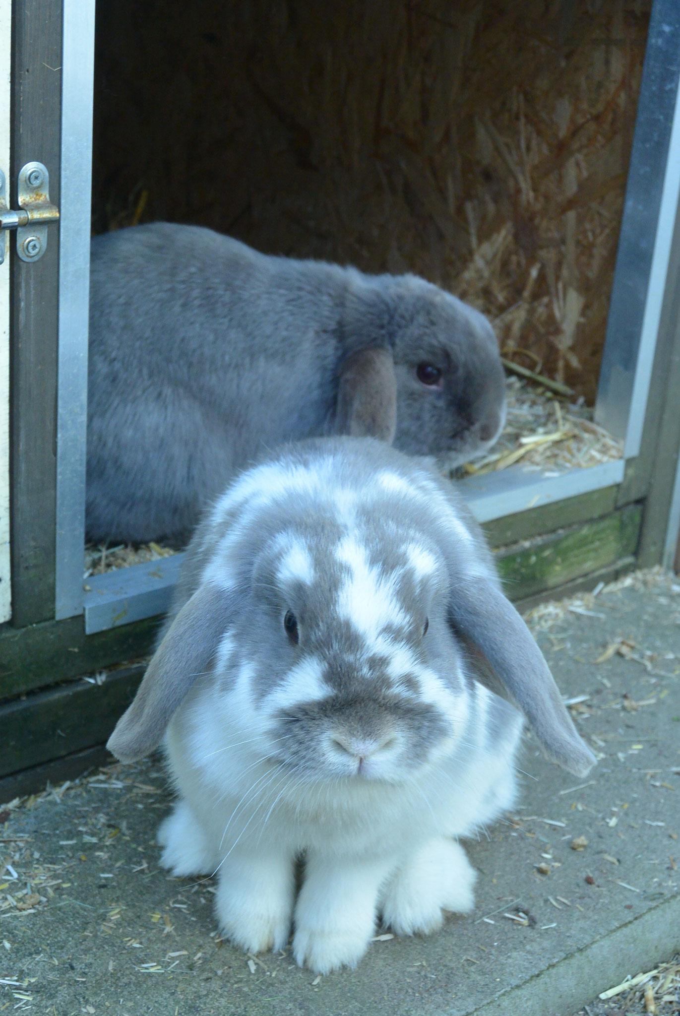 Sunny & Flammy