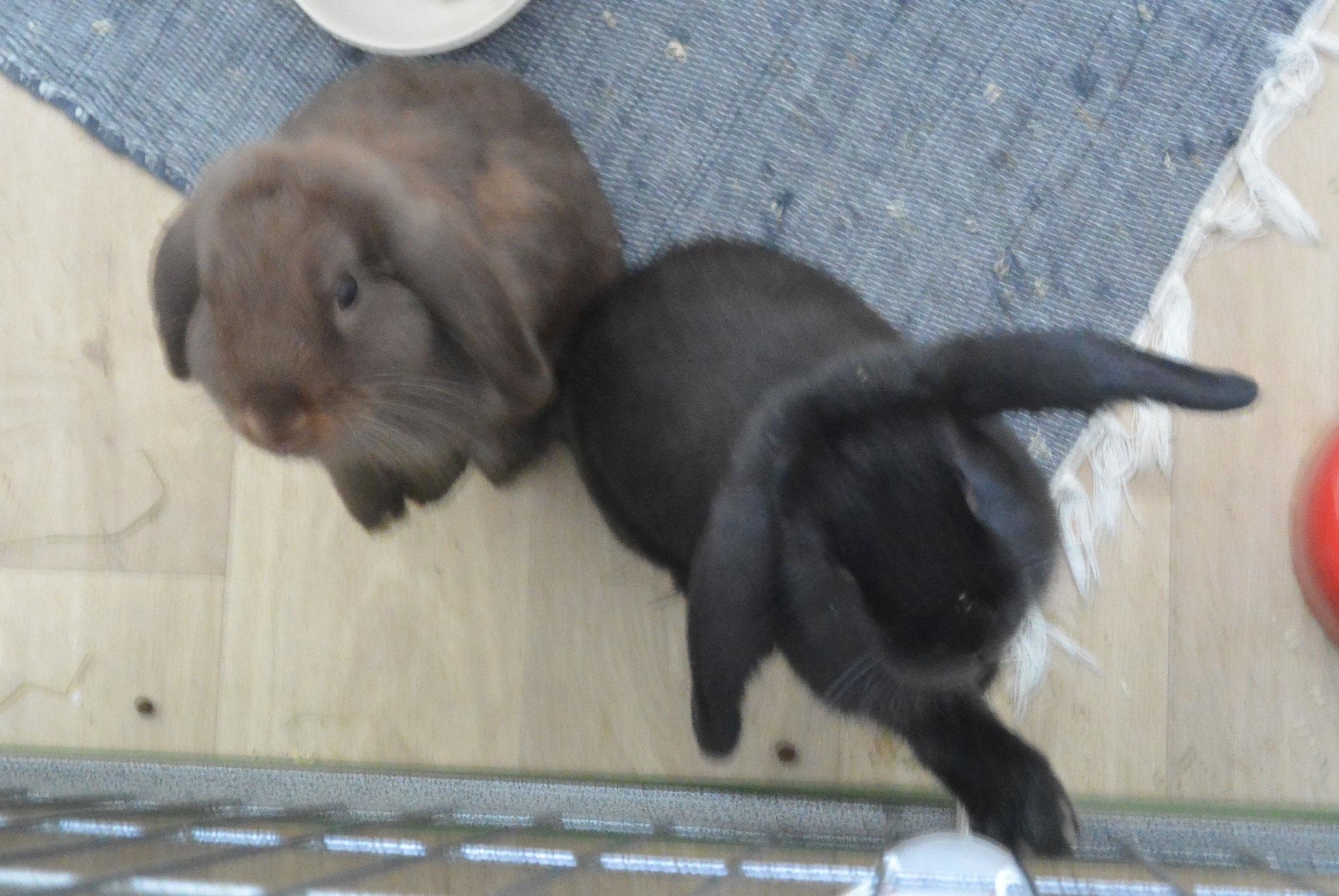 Pepi & Schoko