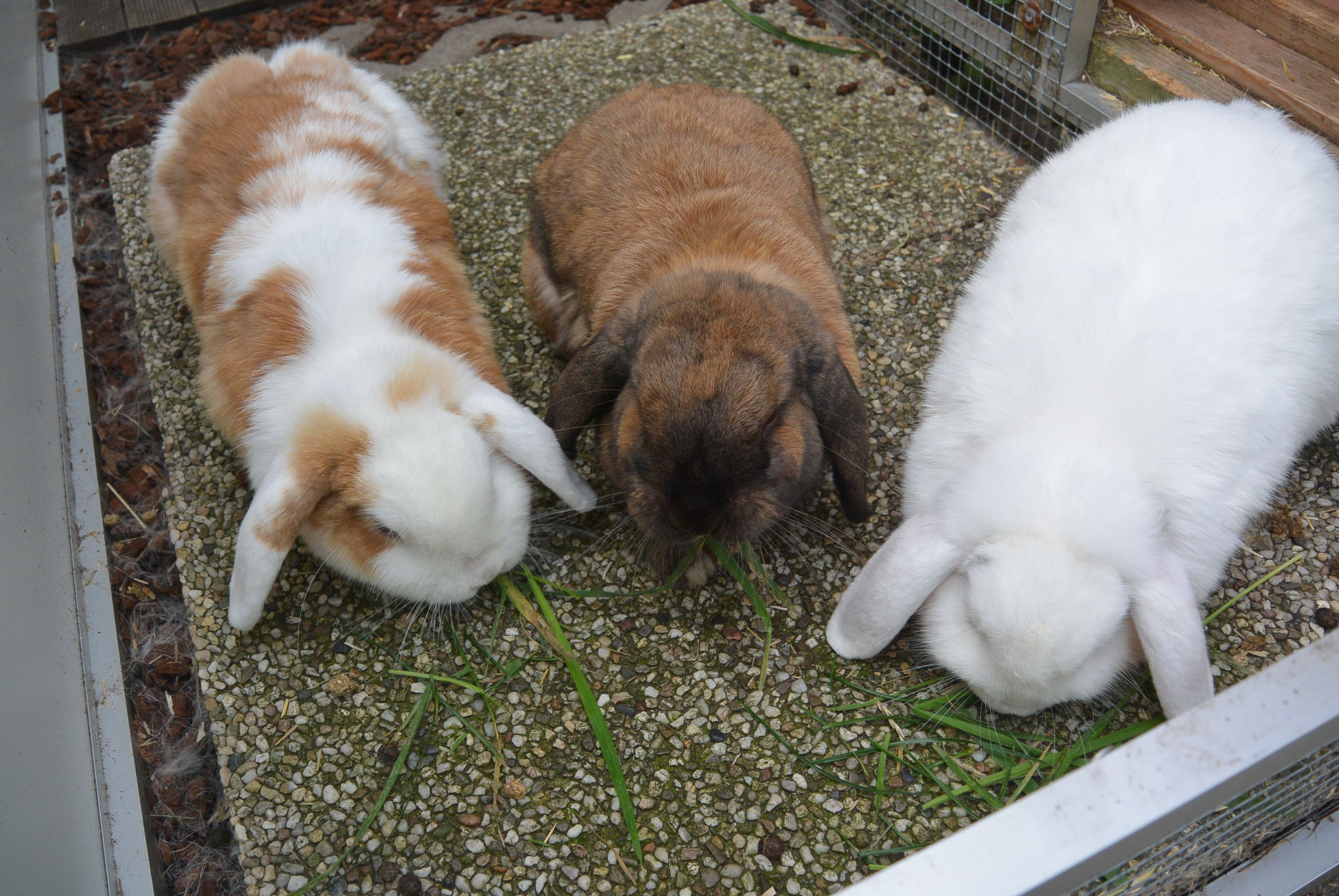 Bella, Biilbo & Bommel