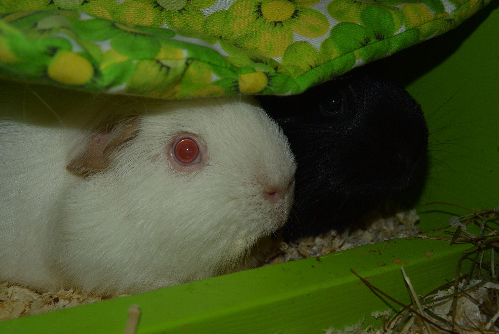 Albus & Nigra
