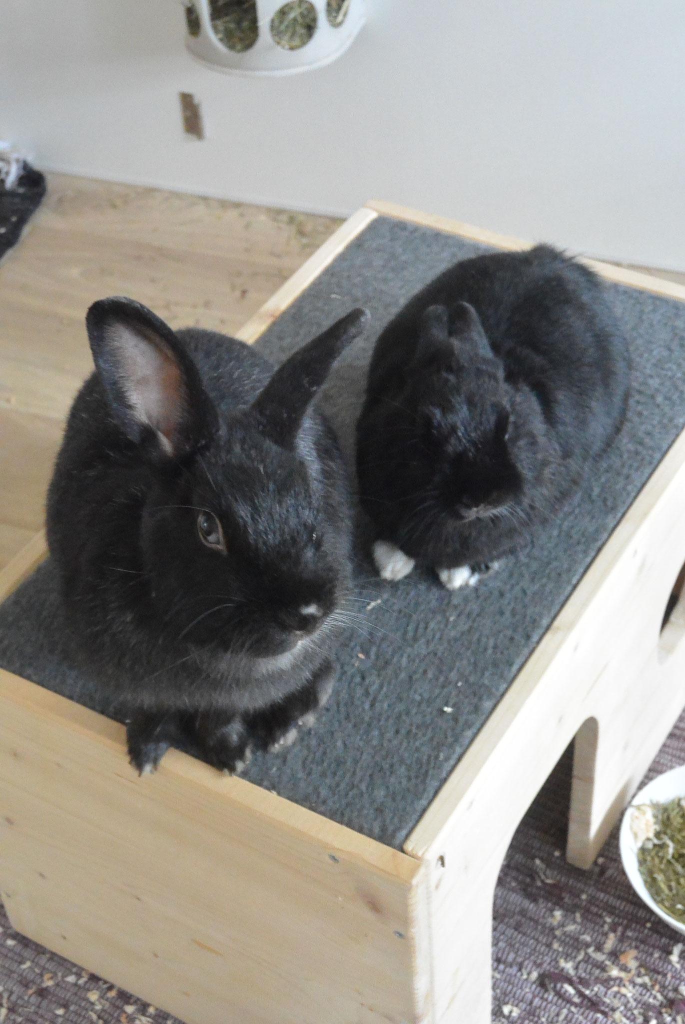 Fee  & Felix