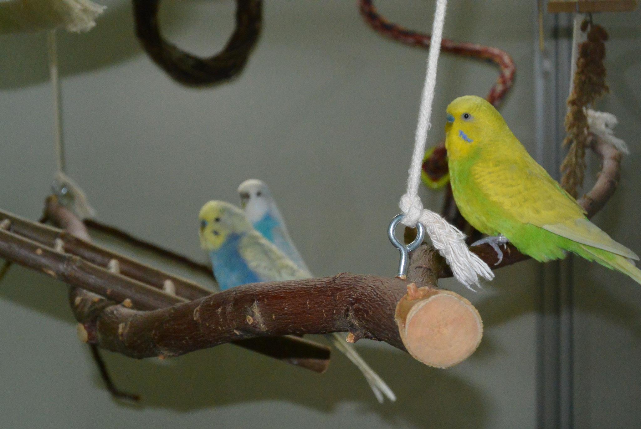 Elliot, Dori & Humpty