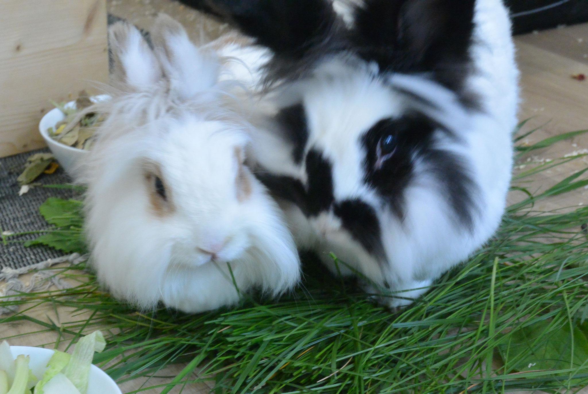 Cleo & Jonny