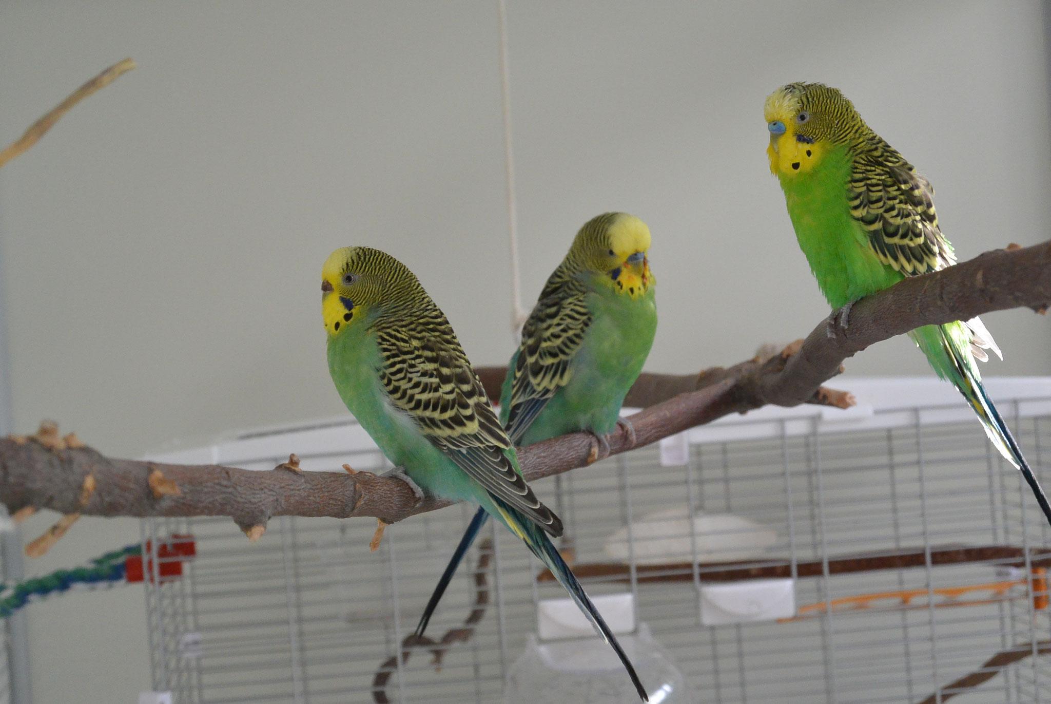 Spatzi, Mina & Ernie