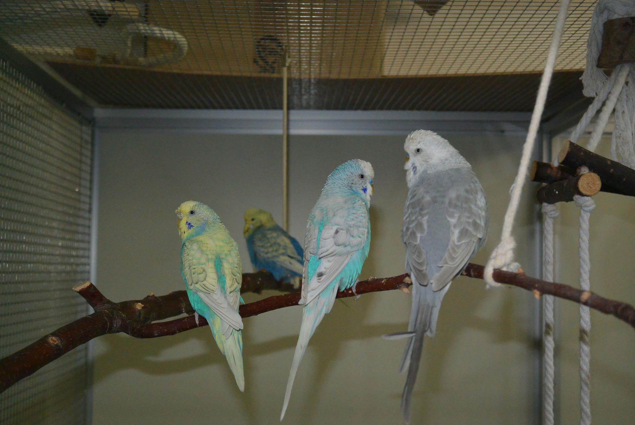 Käthe, Angi, Rubens & Rafael