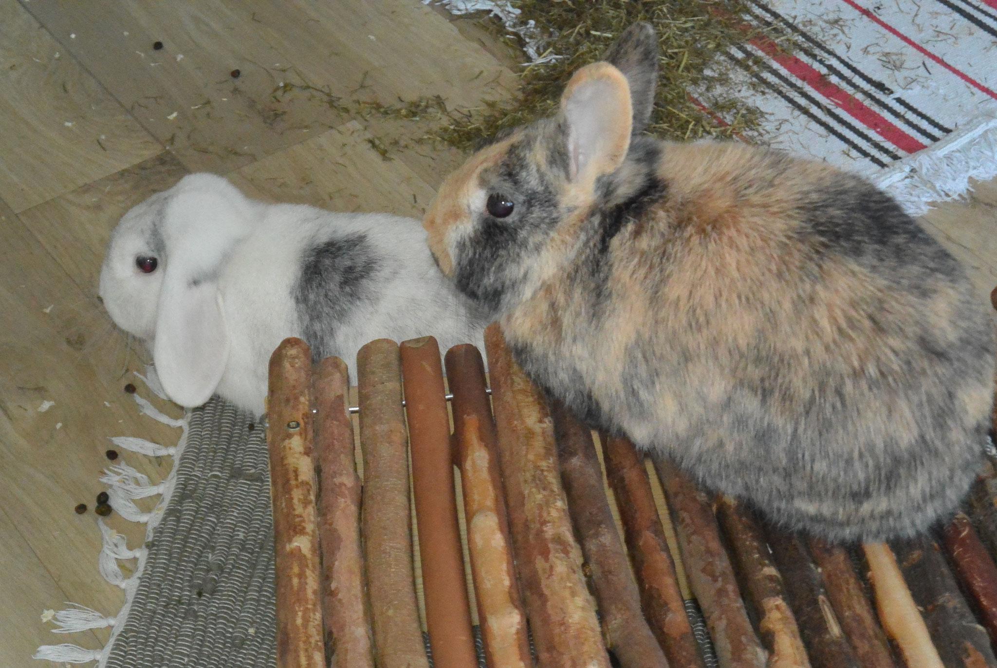 Timon & Luna