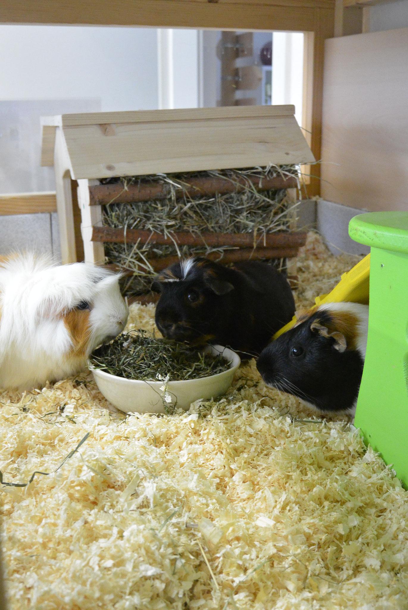 Yoko, Bepina & Lilli