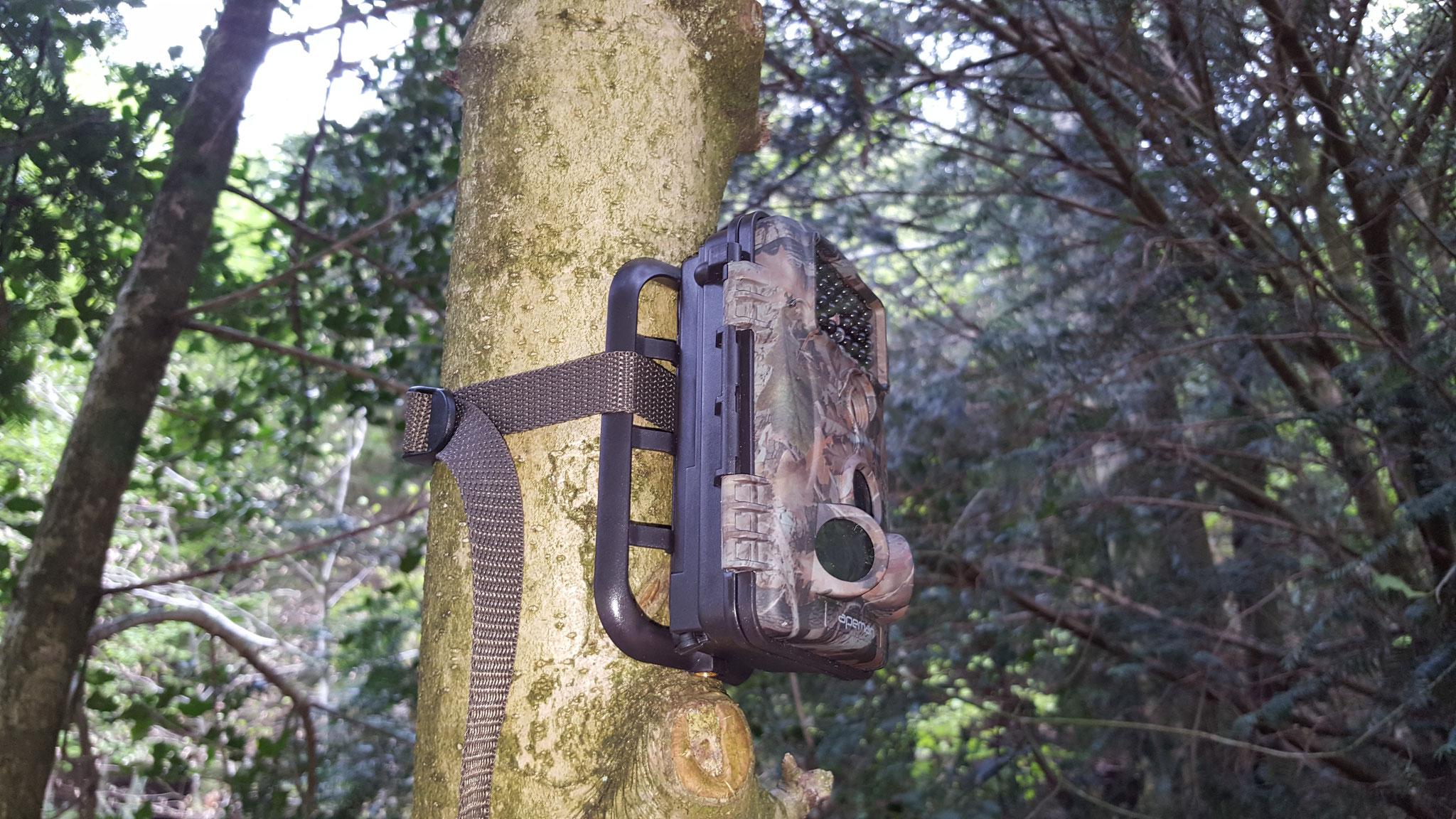 Cam am Baum befestigt