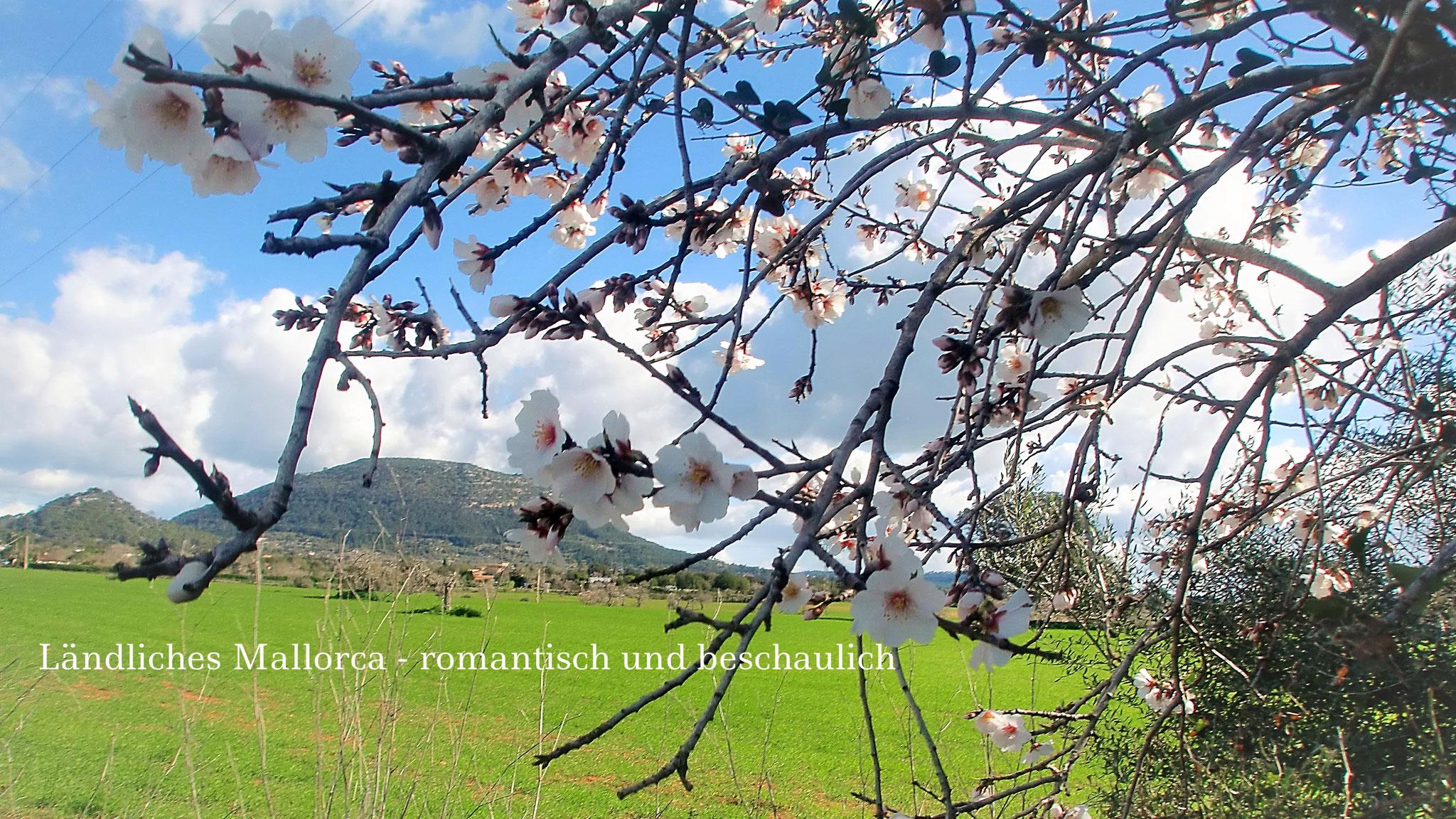 Finca Flora - LLucmajor