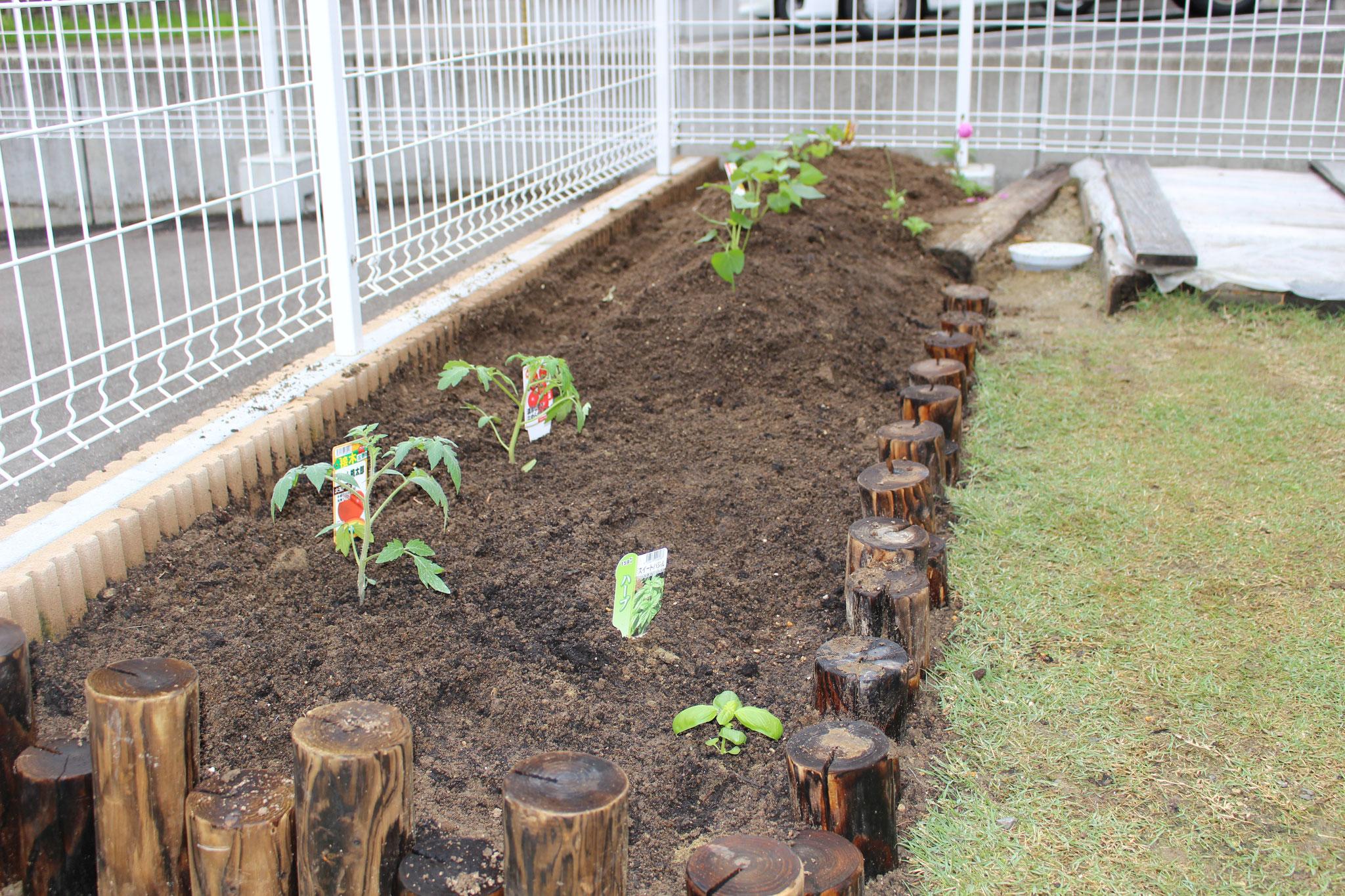 カプア組のお友だちと トマト さつまいも バジル を植えています\(^_^)/ 大きく育つように(*_*; やさしく大事に見守ってね~(*_*;