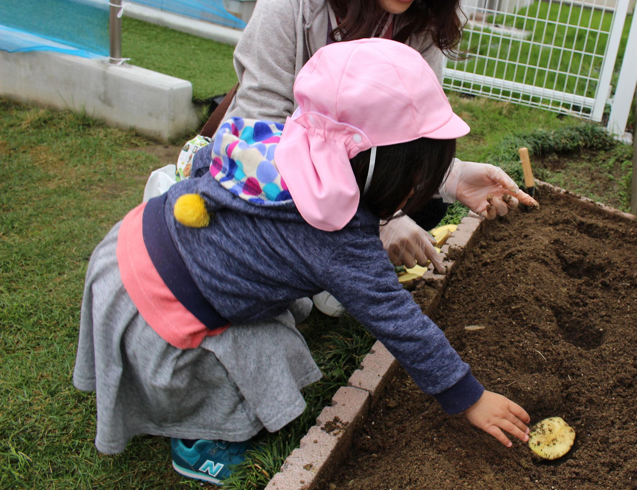 こっちには ジャガイモをうえたね~ 収穫できる日が楽しみだね~(*´▽`*)(^^♪