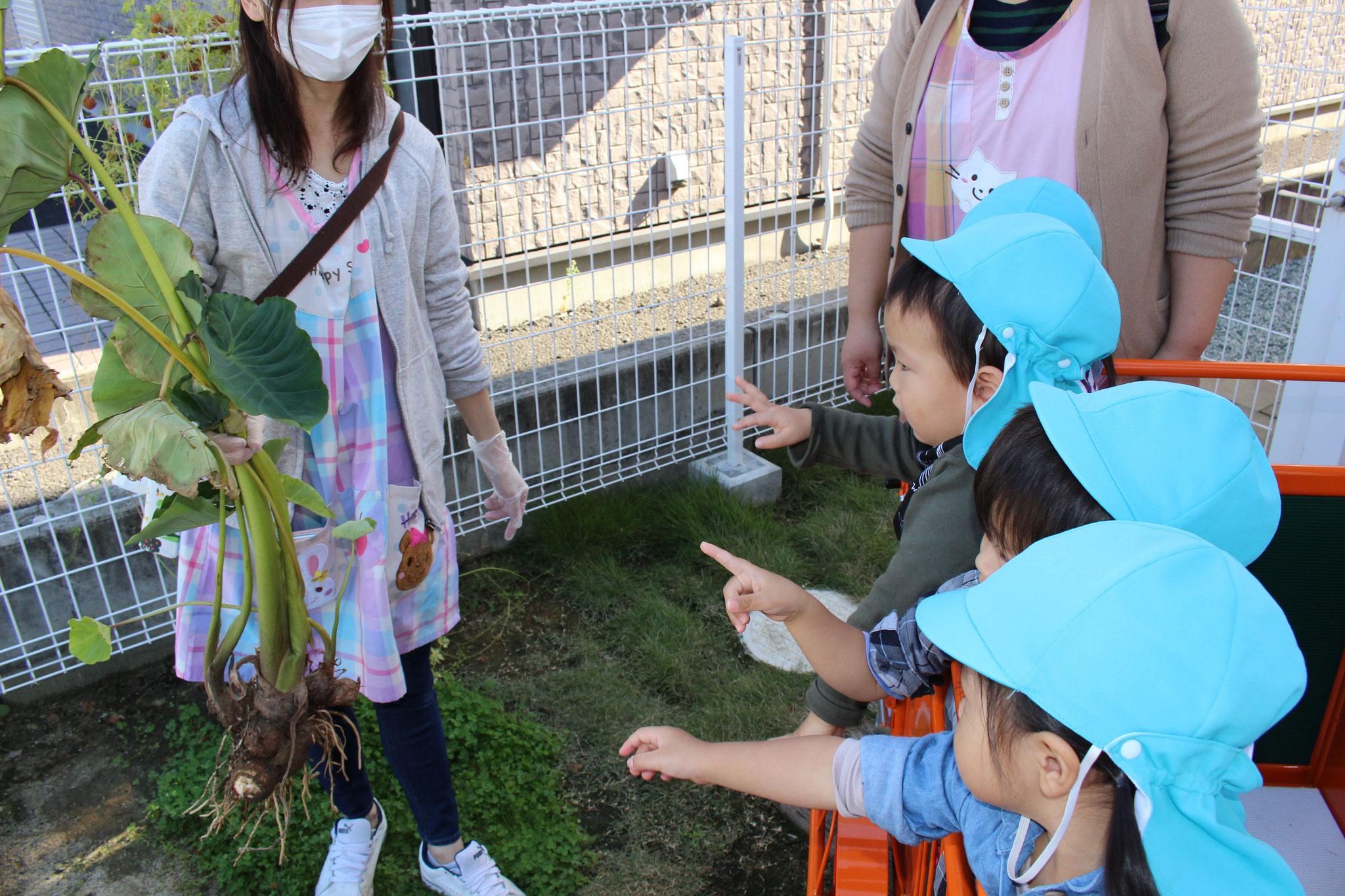 みんな 興味しんしんから 手を伸ばすけど 触るのは 葉っぱだけでね ( TДT)ゴメンヨー