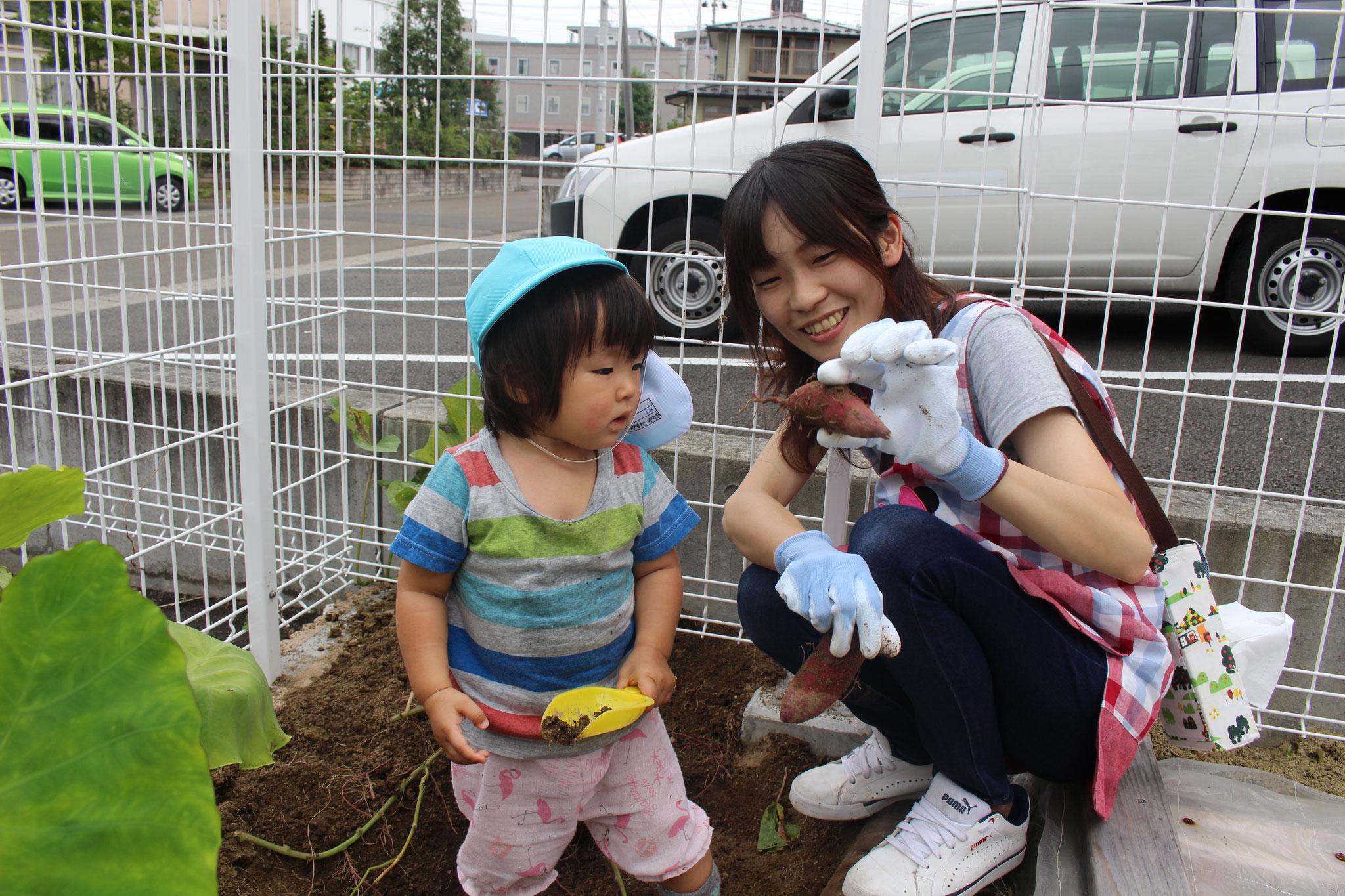 これは こどもの サツマイモさんかな⁉ それとも赤ちゃんかな⁉ カワ(・∀・)イイ!!