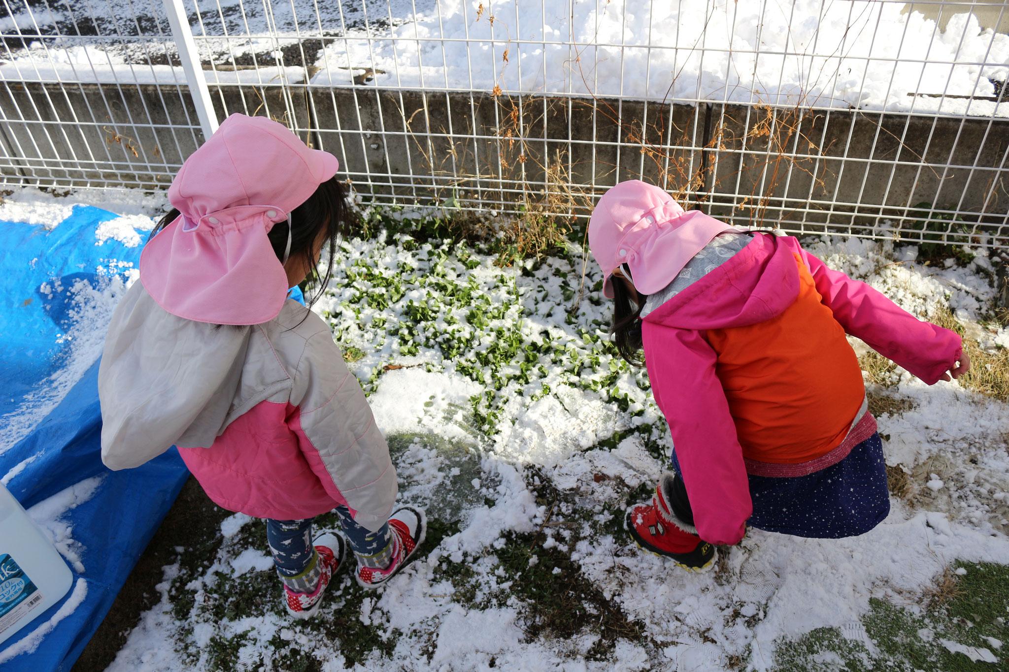 子どもは 氷をみつけると 足で割りますね(笑)