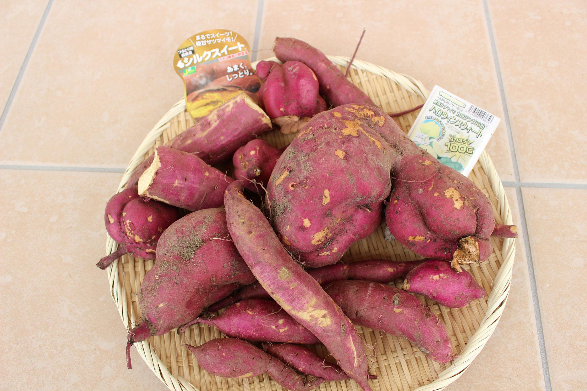 サツマイモは2種類あります。シルクスィートとハロウィンスィートです。甘さがますように これからしばし天日干しに入ります(o_ _)o))!