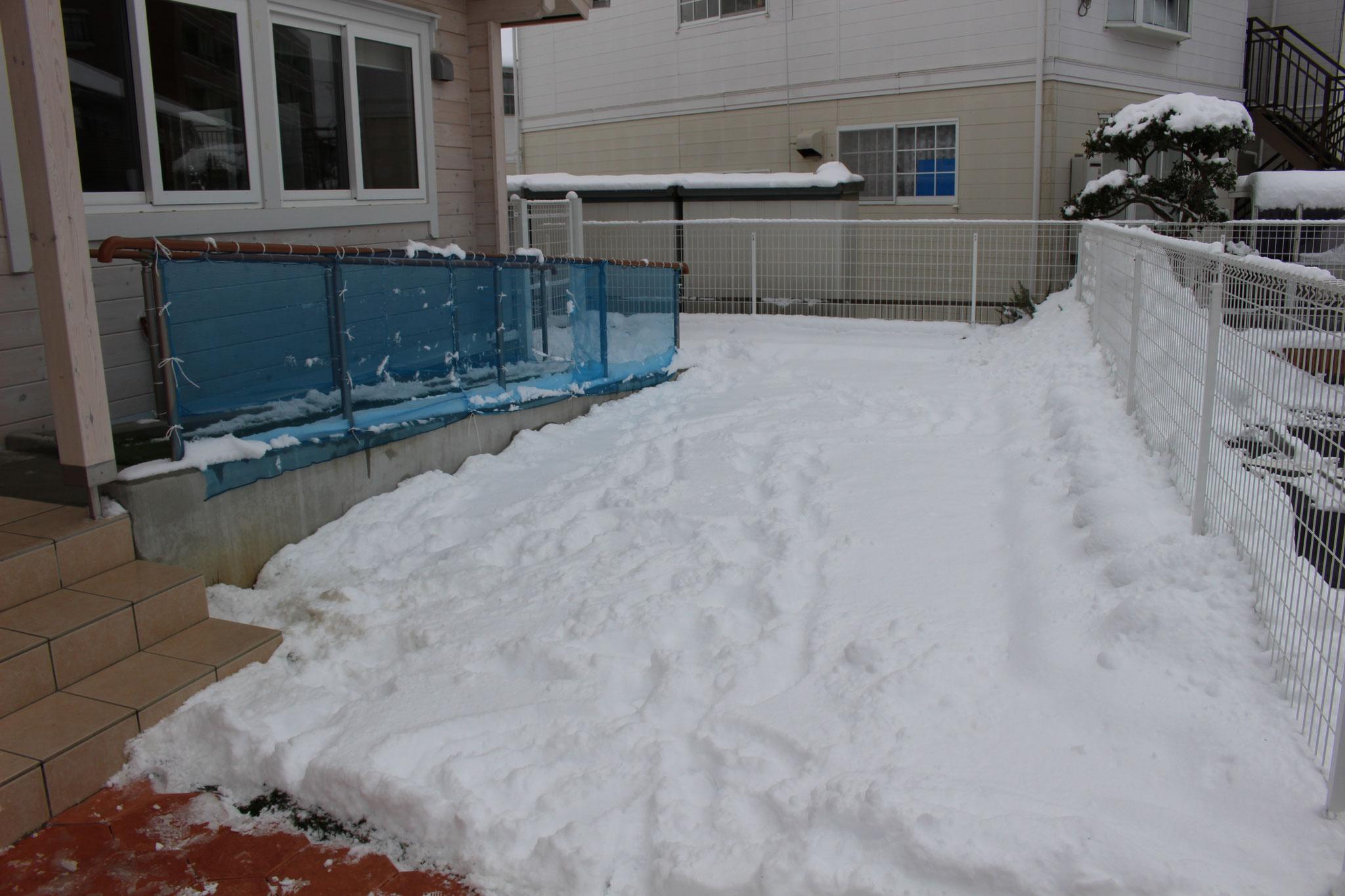 園庭には ふかふかの 雪で 一面が 真っ白です スノーパウダーみたいです😊