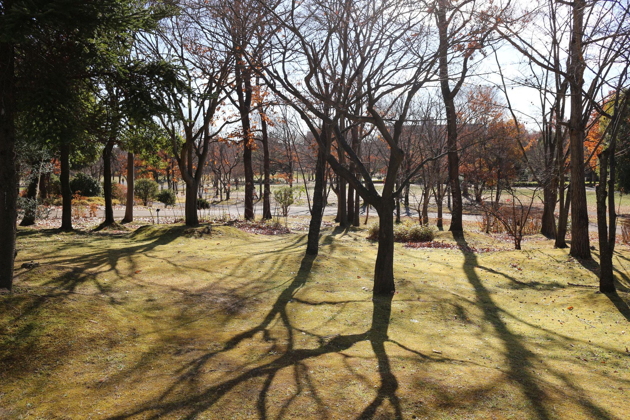 晩秋の七北田公園
