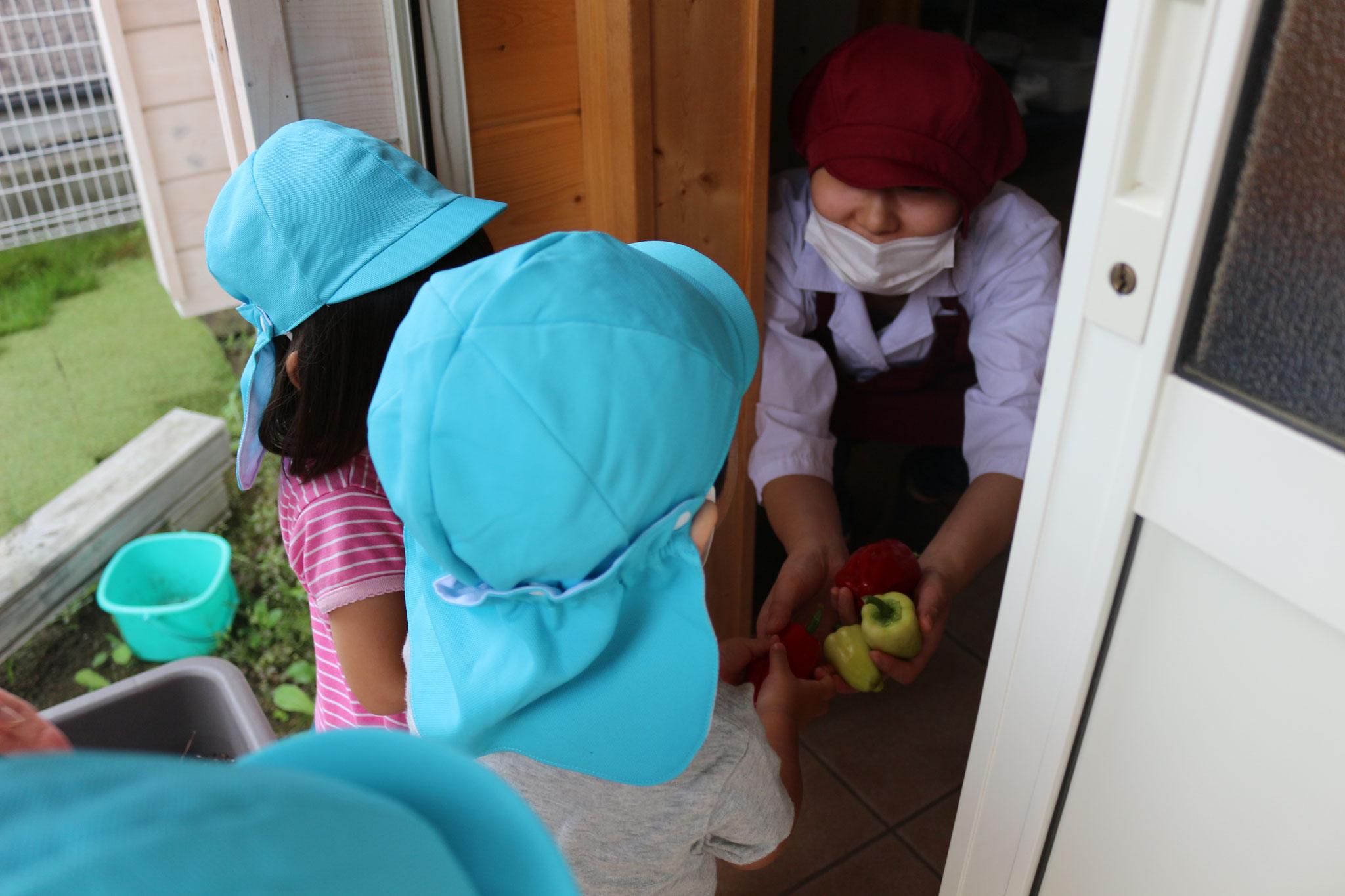 とれたての新鮮野菜は 管理栄養士のM先生にプレゼント!とみんな自発的に行動するようになりました(笑)