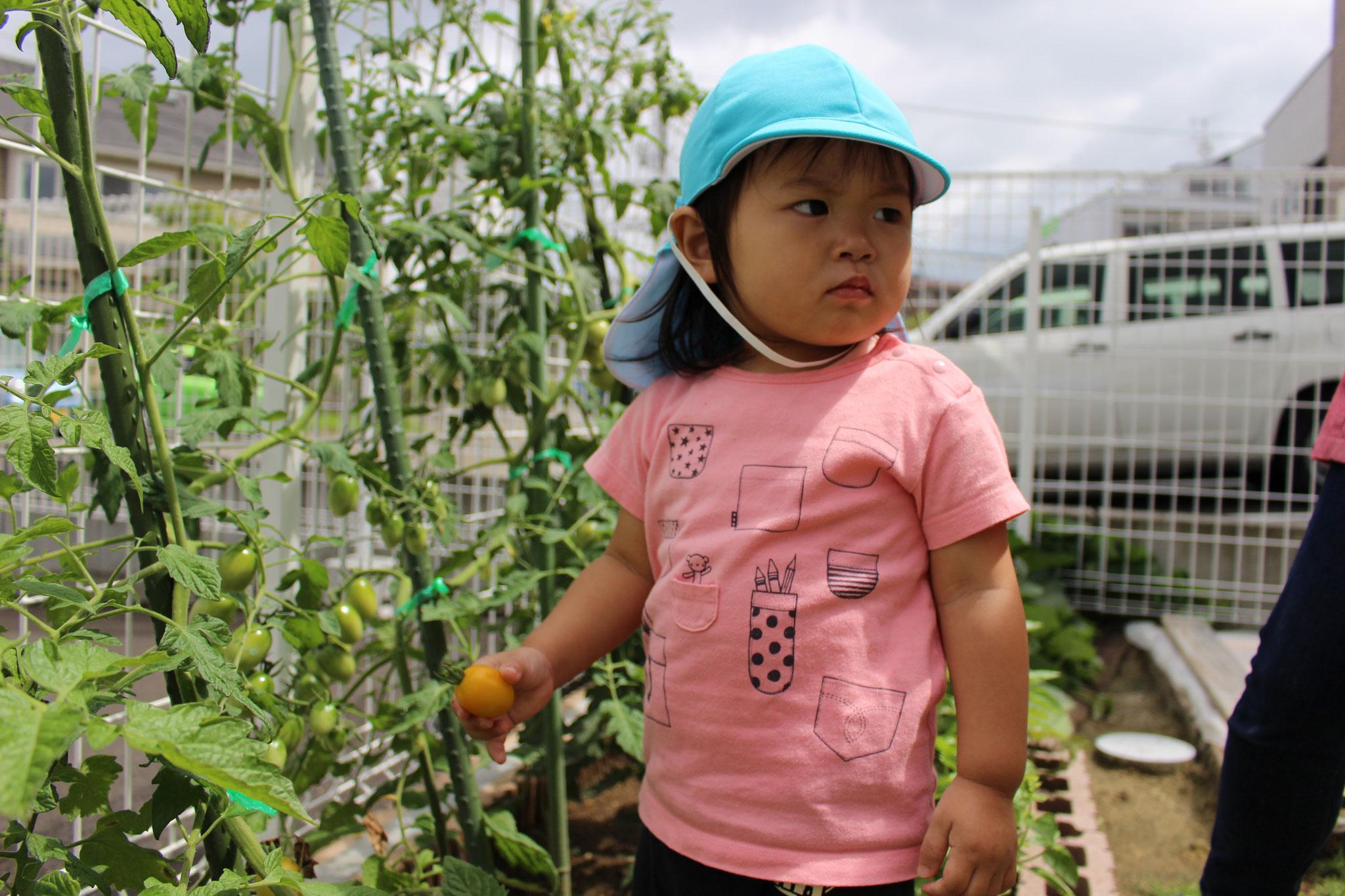 野菜を 手に取り 凛々しい 表情を浮かべる Mちゃん 見据える先には 何があるのかな~ とっても気になります!
