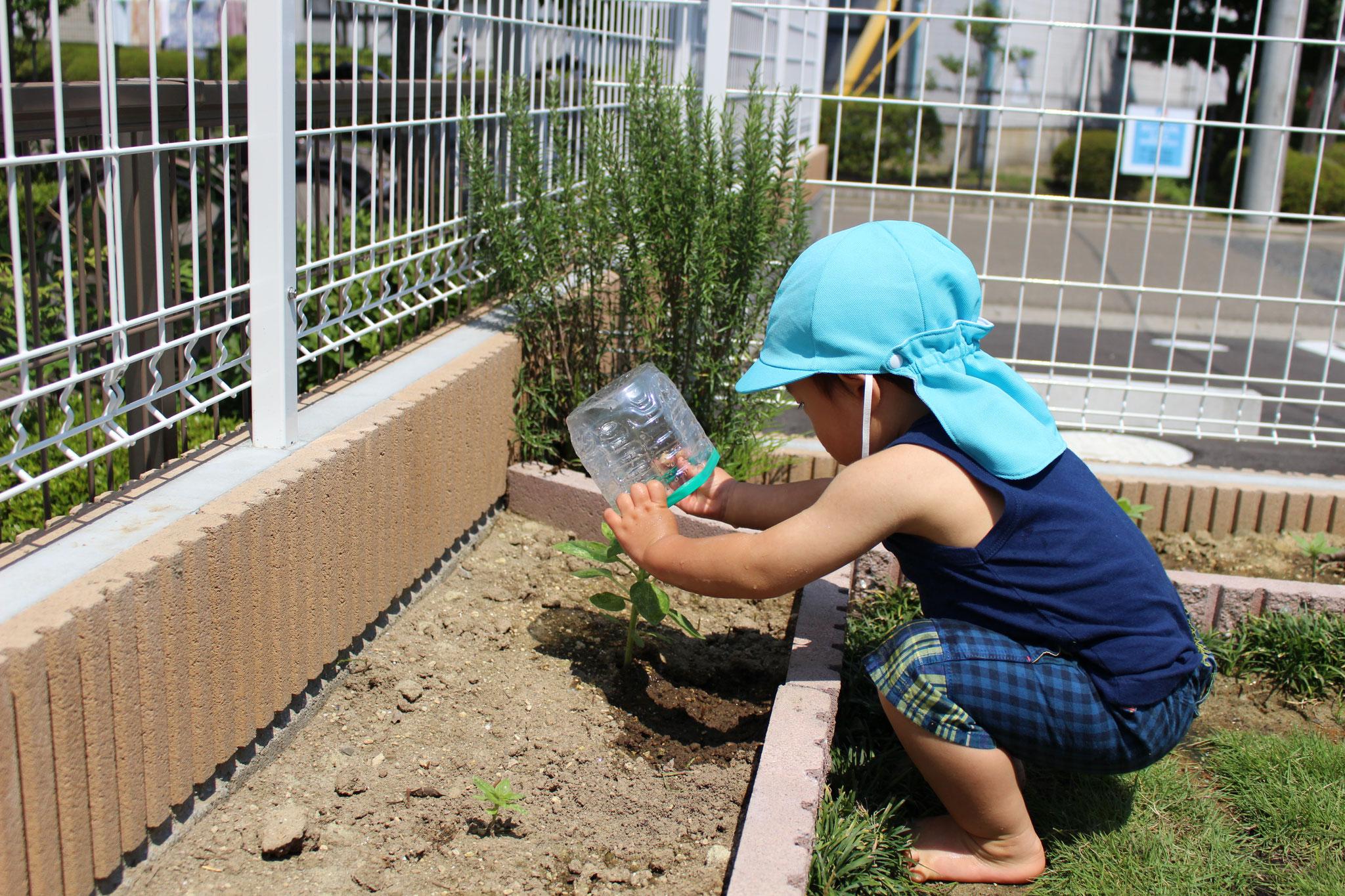 いつも おはなに みずを あげてくれたね🌻 おかげさまで きれいなちょうちょうさんが 遊びにきてくれる 園庭になったよ\(^_^)/