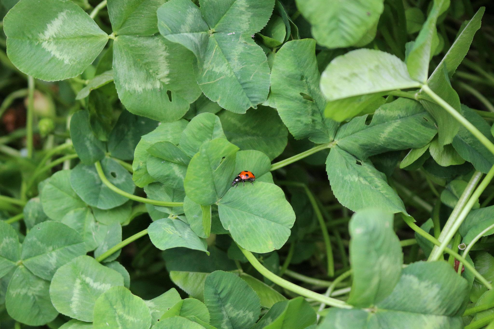 主に虫さんはダンゴムシ、アリ、カタツムリがいます。他にも🦋や🐞なども見ることができると自然に触れ合う機会がもてます。