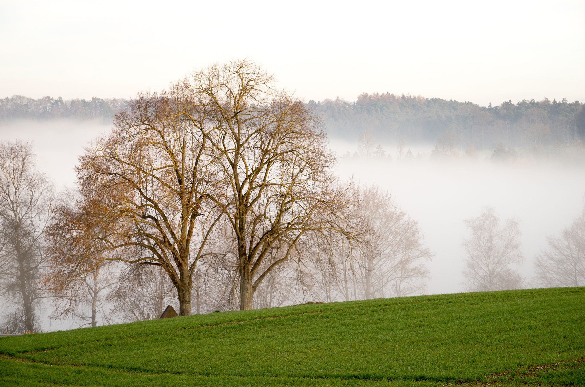 """Klaus Bramer """"Herbstlicher Nebel"""""""